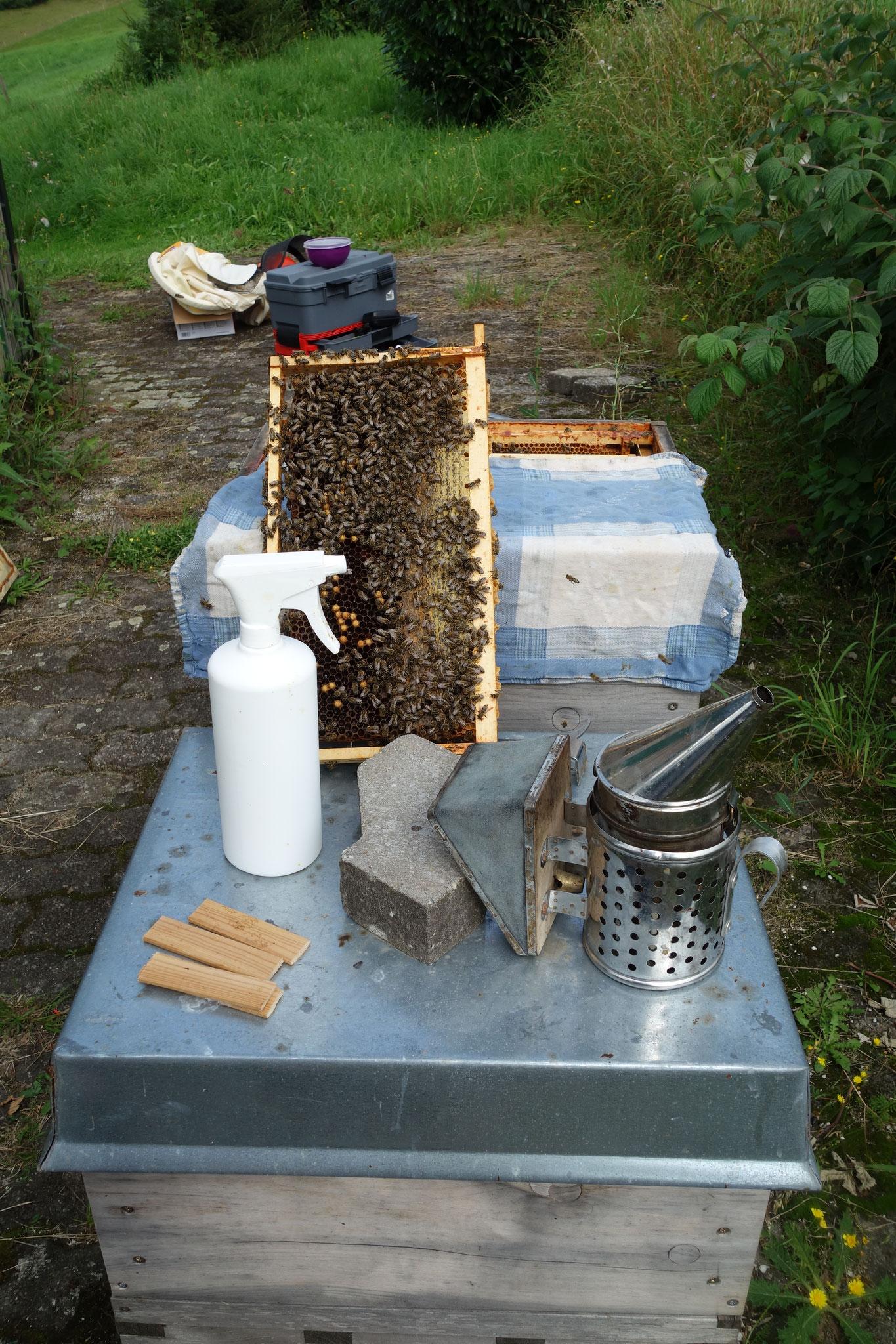 Bild 8: Das Volk wird während der Behandlung mit einem Tuch mit Nelkenöl abgedeckt. So bleiben die Bienen ganz ruhig.