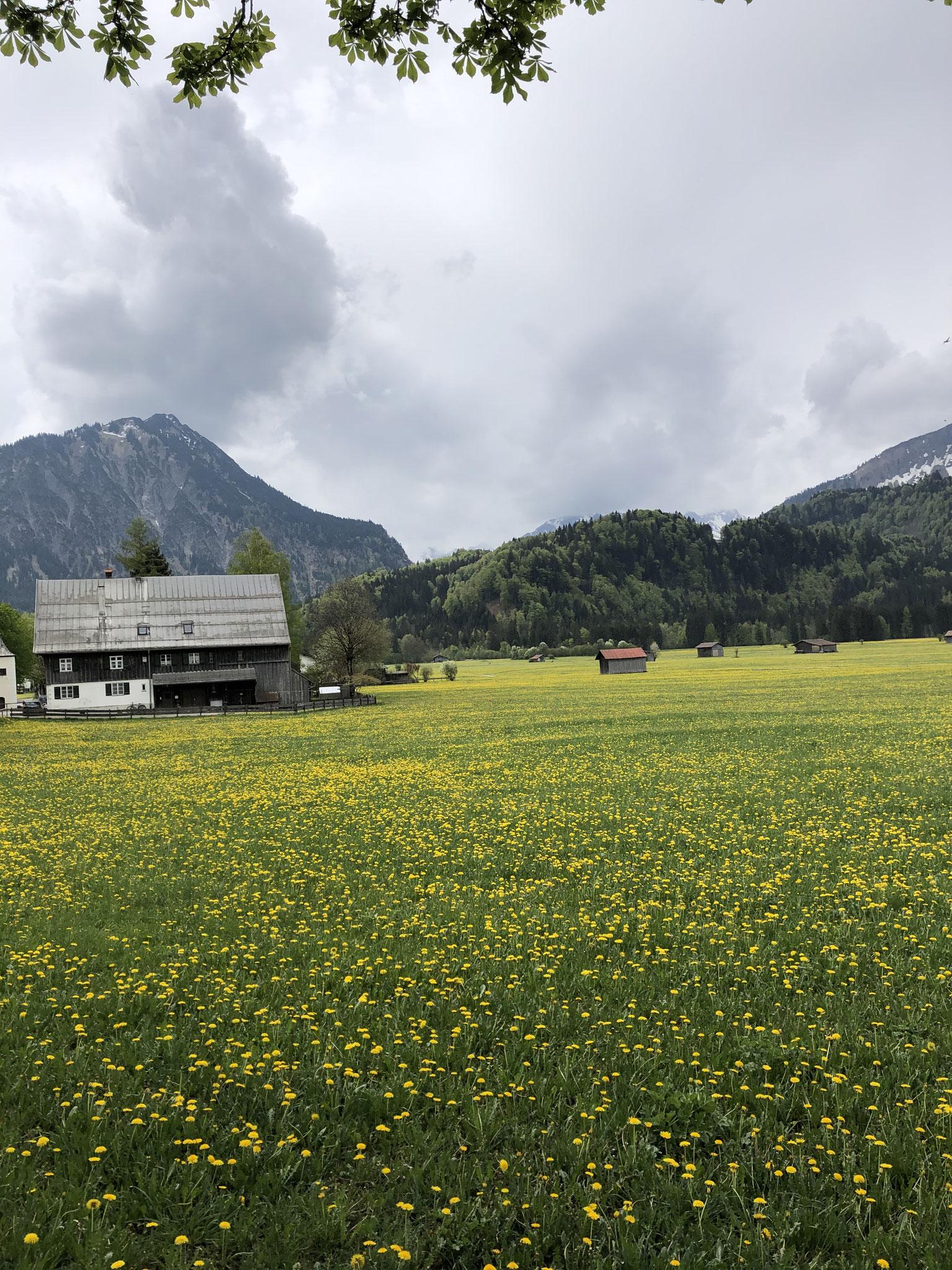 Die Wiesen im Süden von Oberstdorf