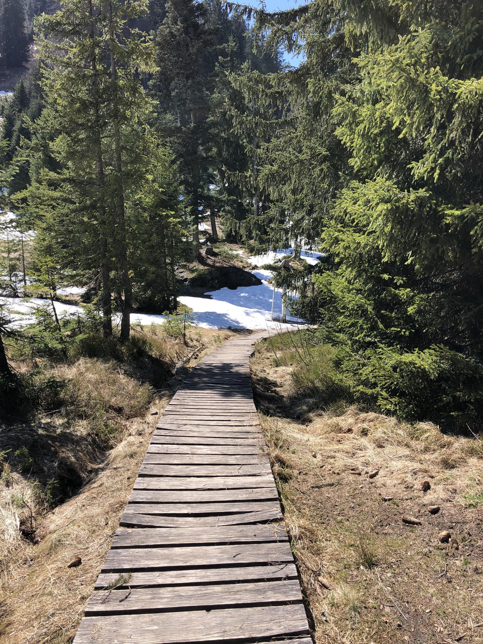 Auf dem Weg zum Söllerkopf