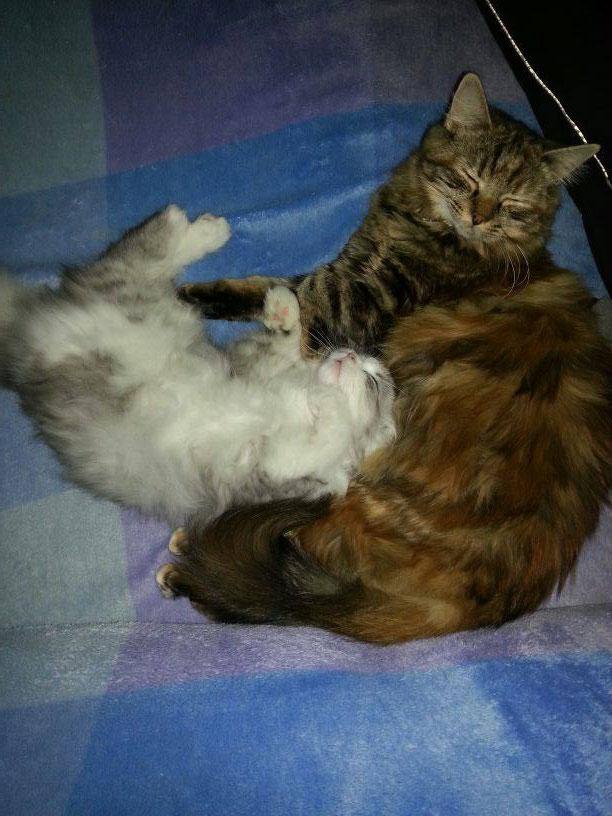 Soraya und Gizmo of silver pepper