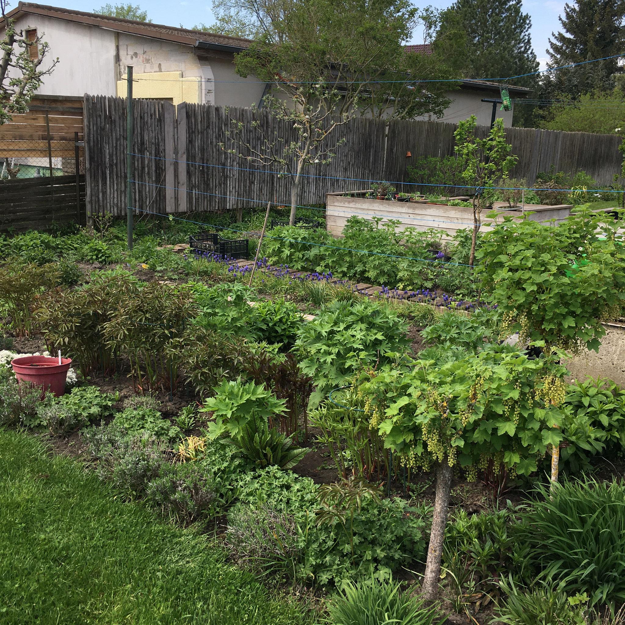 Gemüsegarten im Mai 21