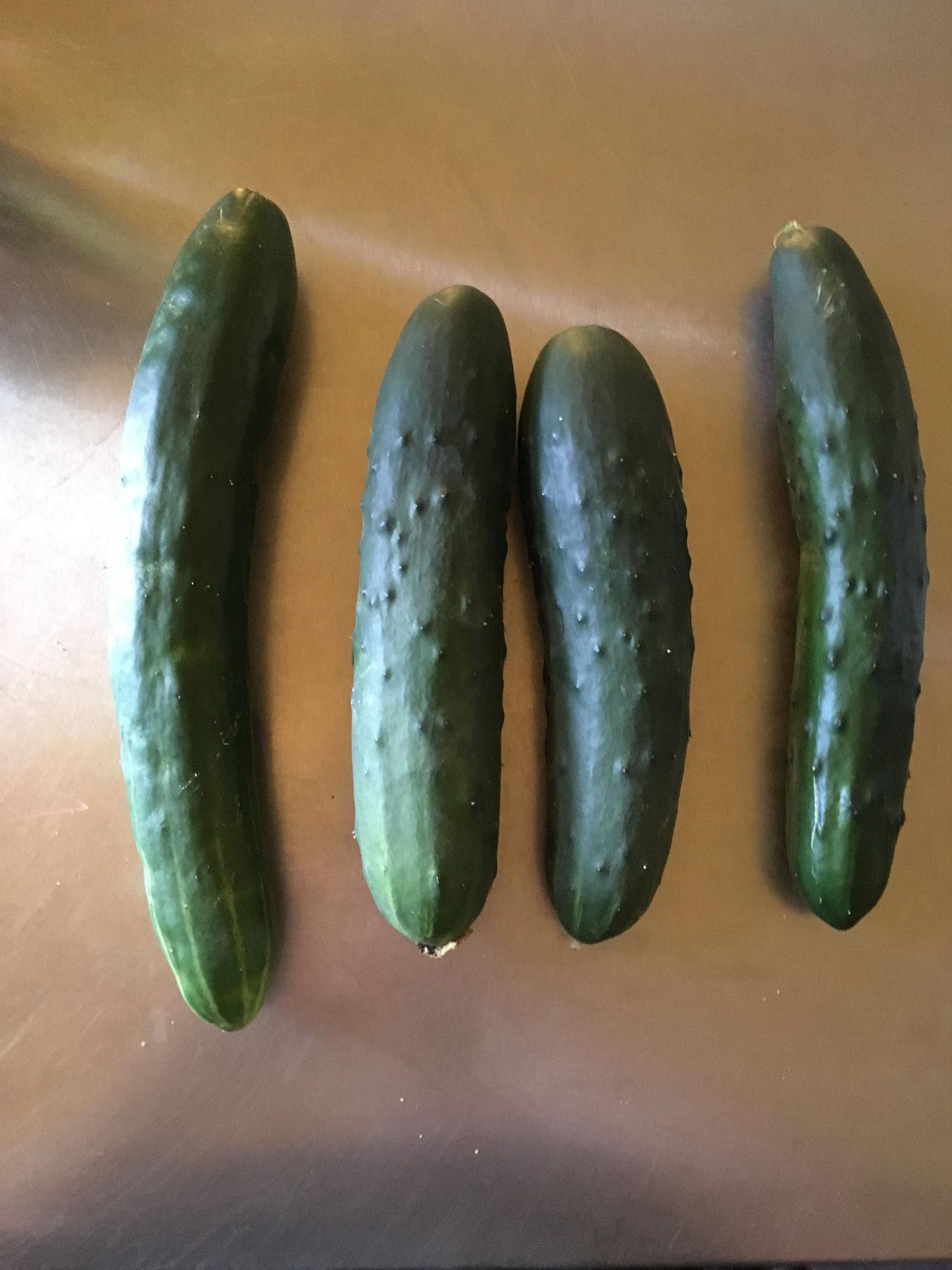 von rechts: Freilandgurke - Lothar- Cindy