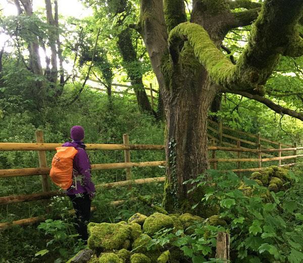 Woodland on Bonsall Moor walk