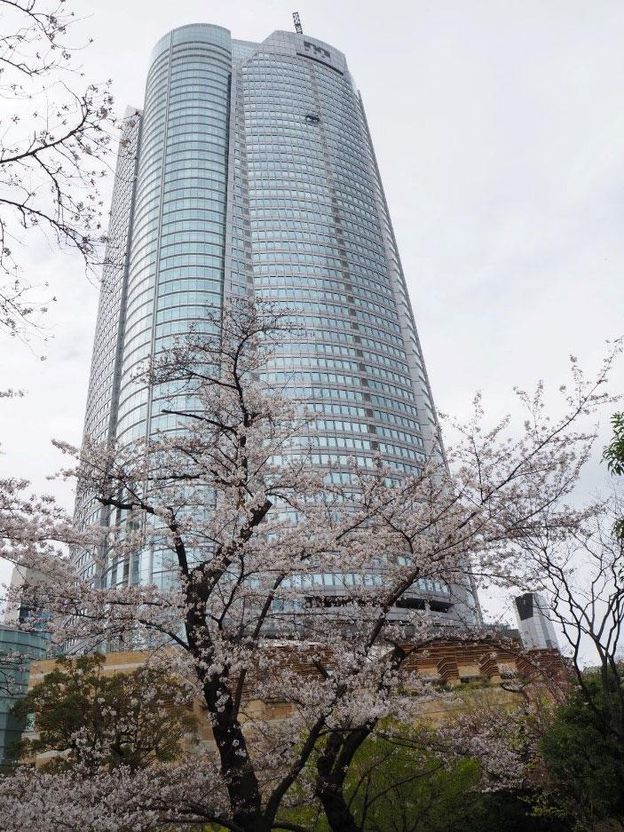 【毛利庭園】現代建築と桜が織りなす絶妙な構図