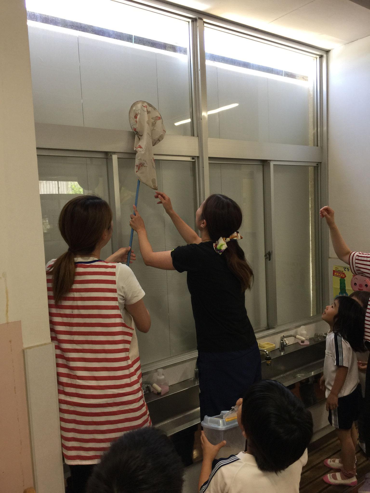 幼稚園にトンボのお客さんが!!