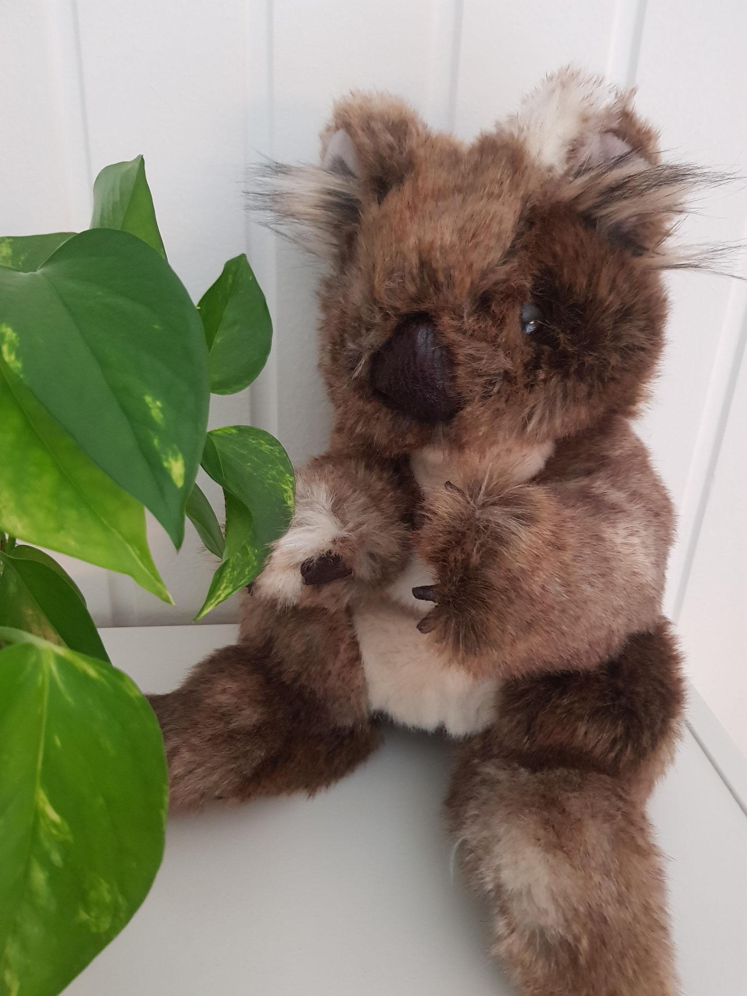 """Lerngruppe """"Koala"""" Jahrgang 1 - Leiterinnen Frau Fritsche und Frau Berenbrinker - Gruppentier Konrad, der Koala"""