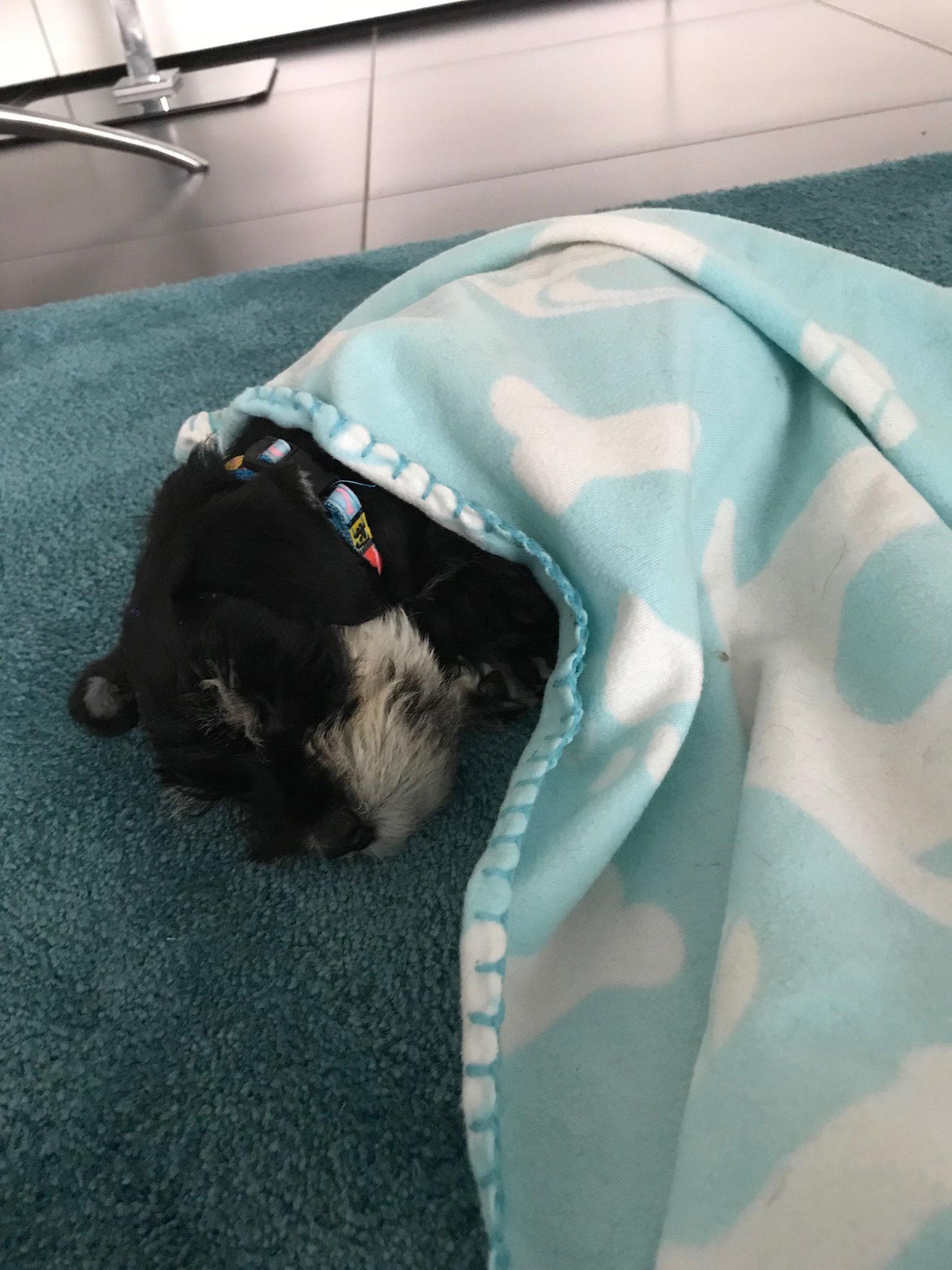 ....Erik schläft selig im neuen Heim!