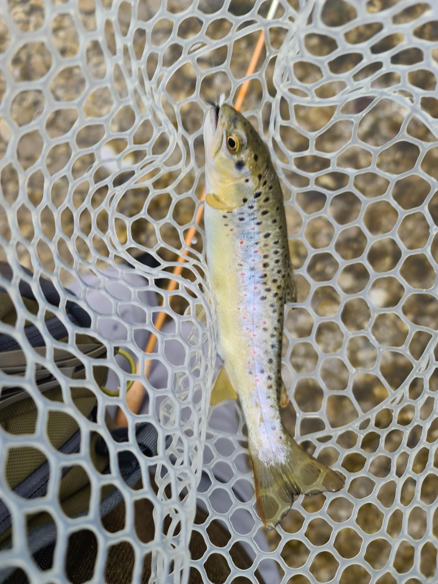 01.05.2021 Fischen an der Alm