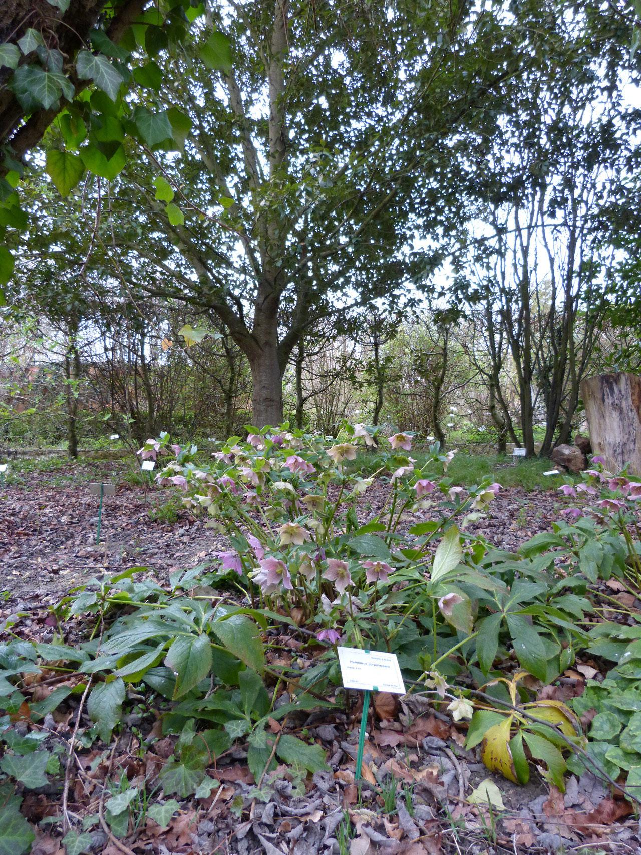 jardin botanique de Marnay sur Seine, Nogentais
