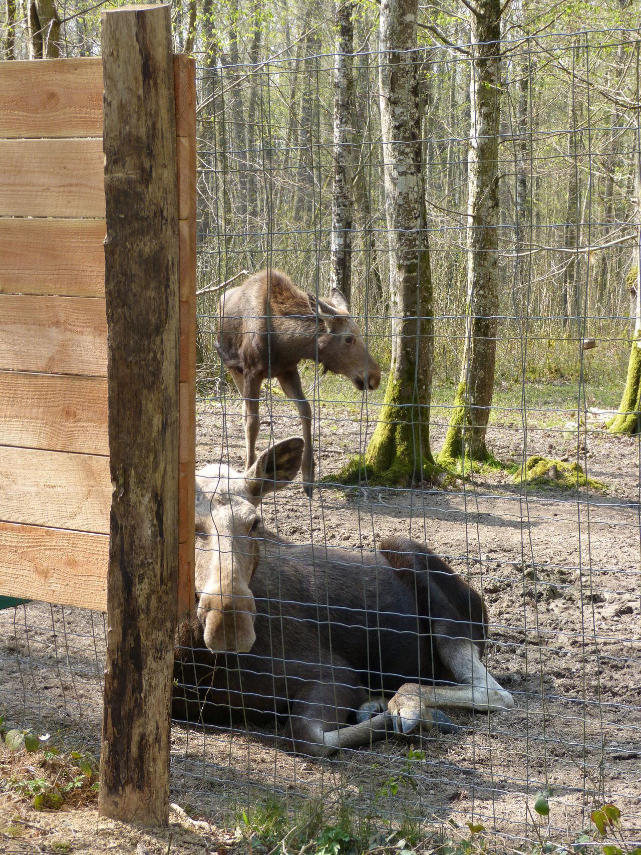 espace faune sauvage, des terpands, Forêt d'Orient