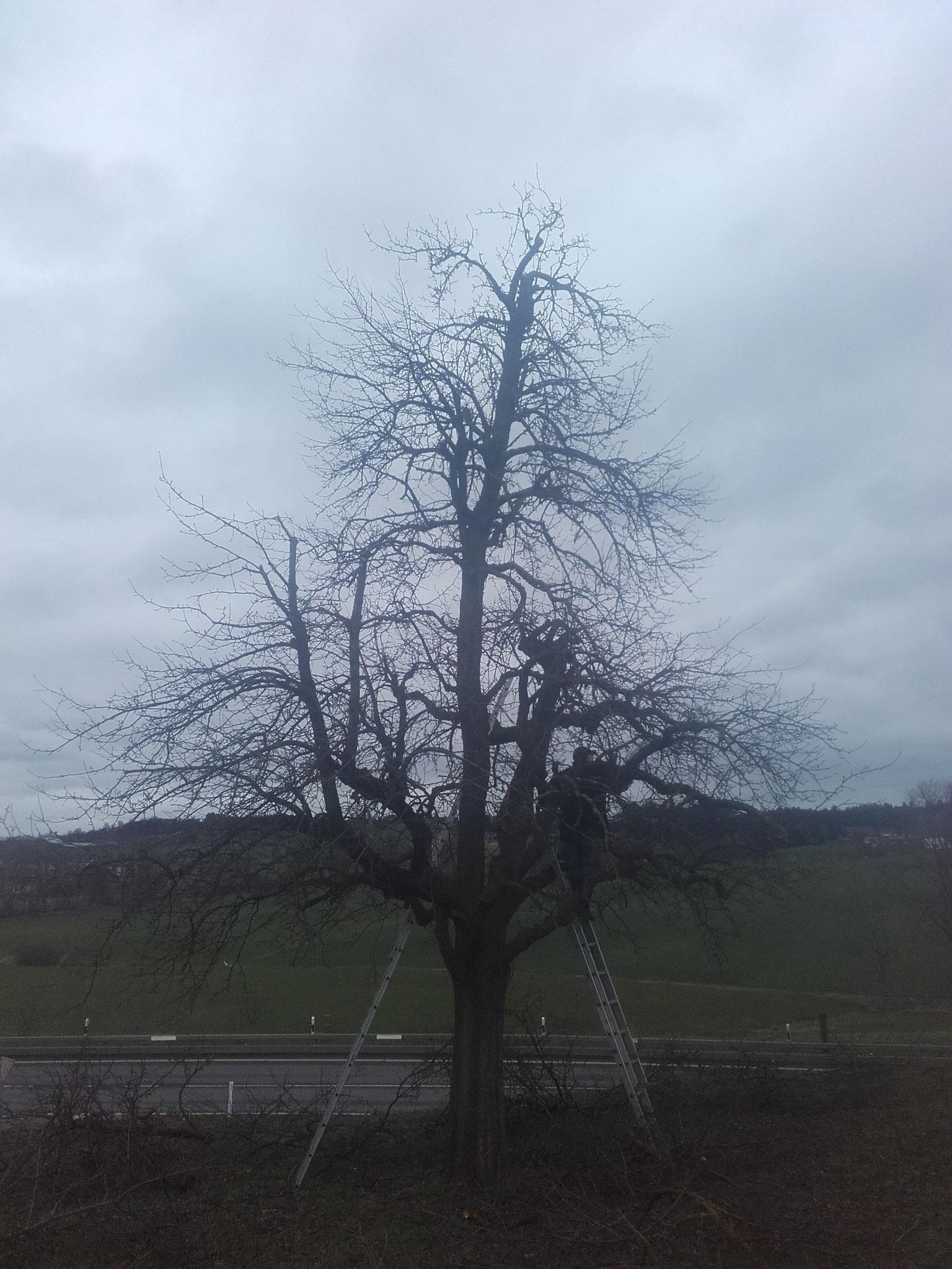 Bäume pflanzen, schneiden...