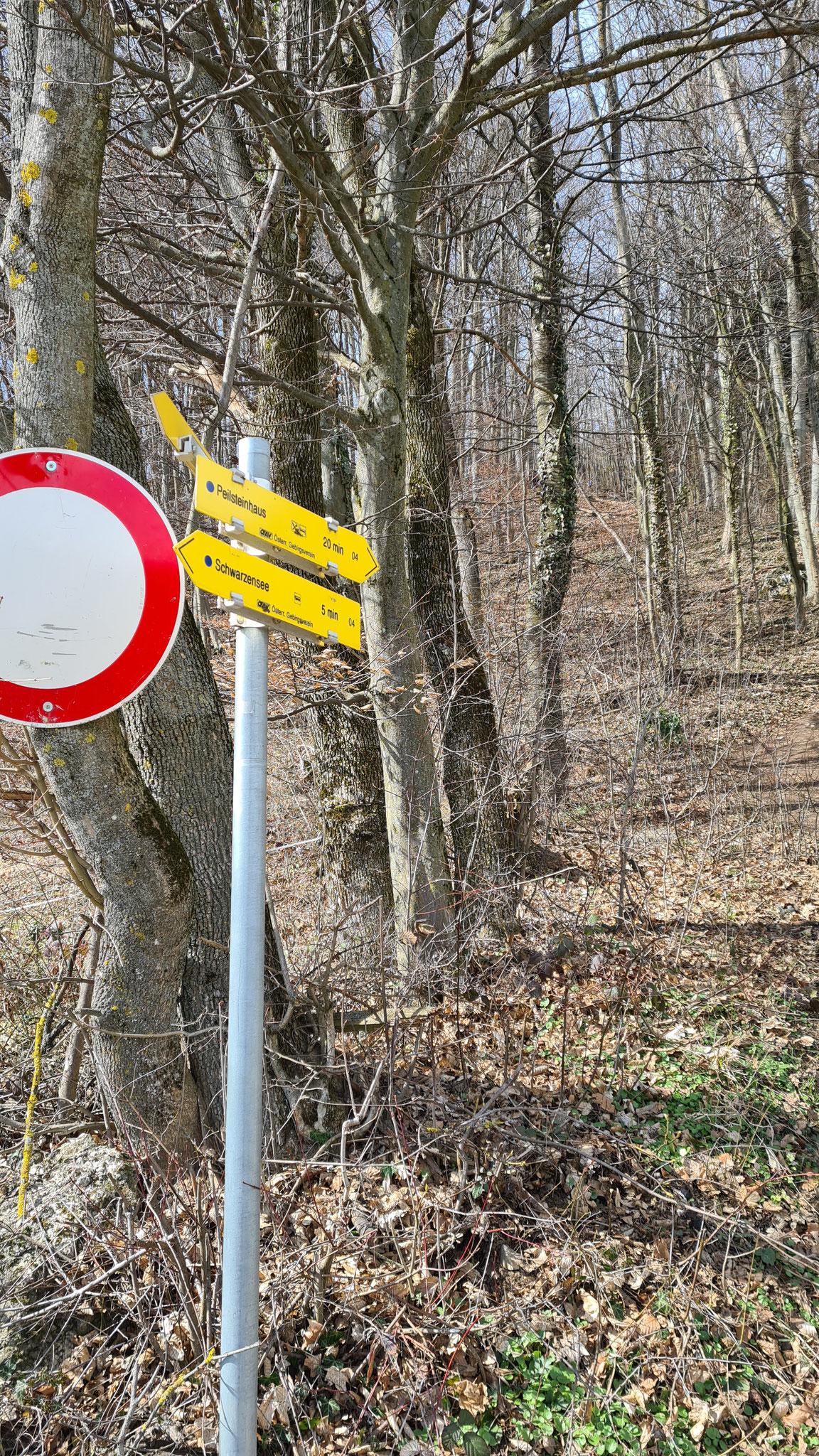 Gabelung rechts direkt durch den Wald, links entlang des Forstweges