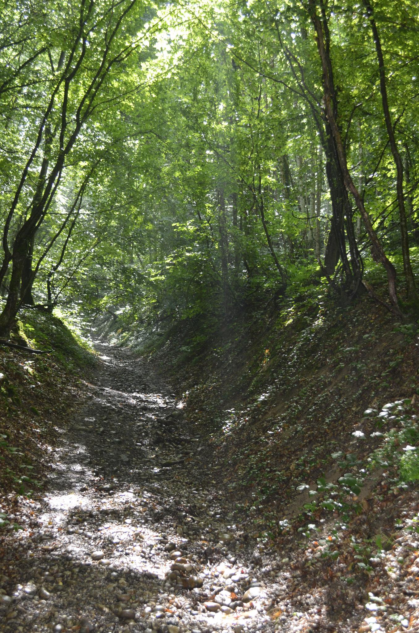 Marche médecine dans la forêt