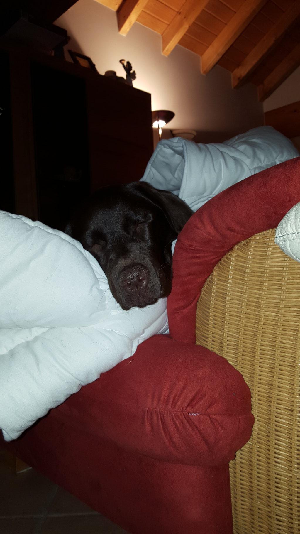 ...da schläft es sich auch herrlich bequem....und warm....