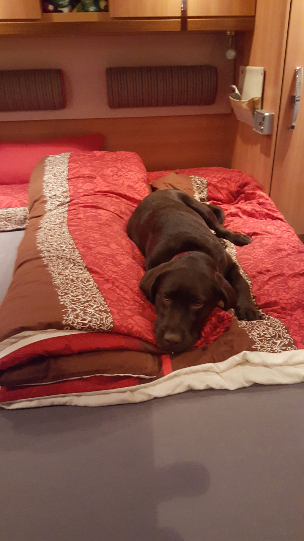 Im Bett von Mama und Papa im Wohnmobil...ob ich für die beiden Platz machen soll?