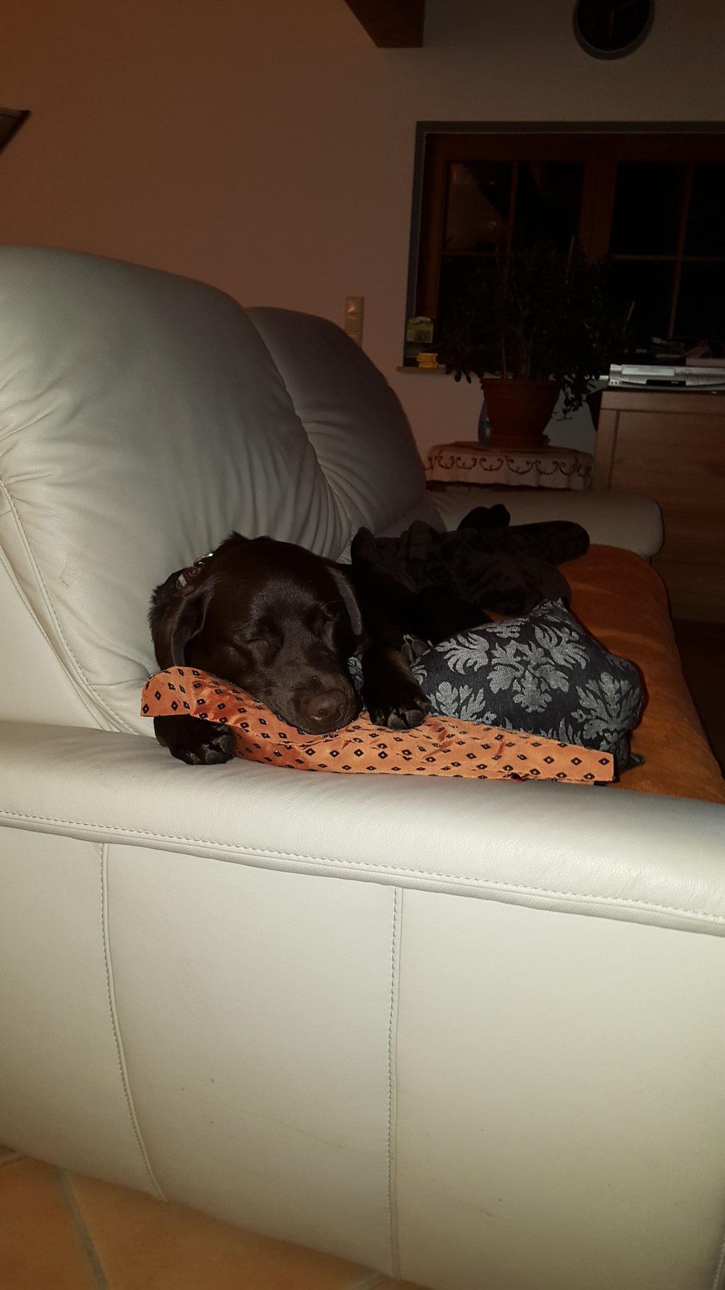 ...auf Mama's Kissen schläft es sich herrlich...das einzige, dass ich nicht kaputt gemacht habe...