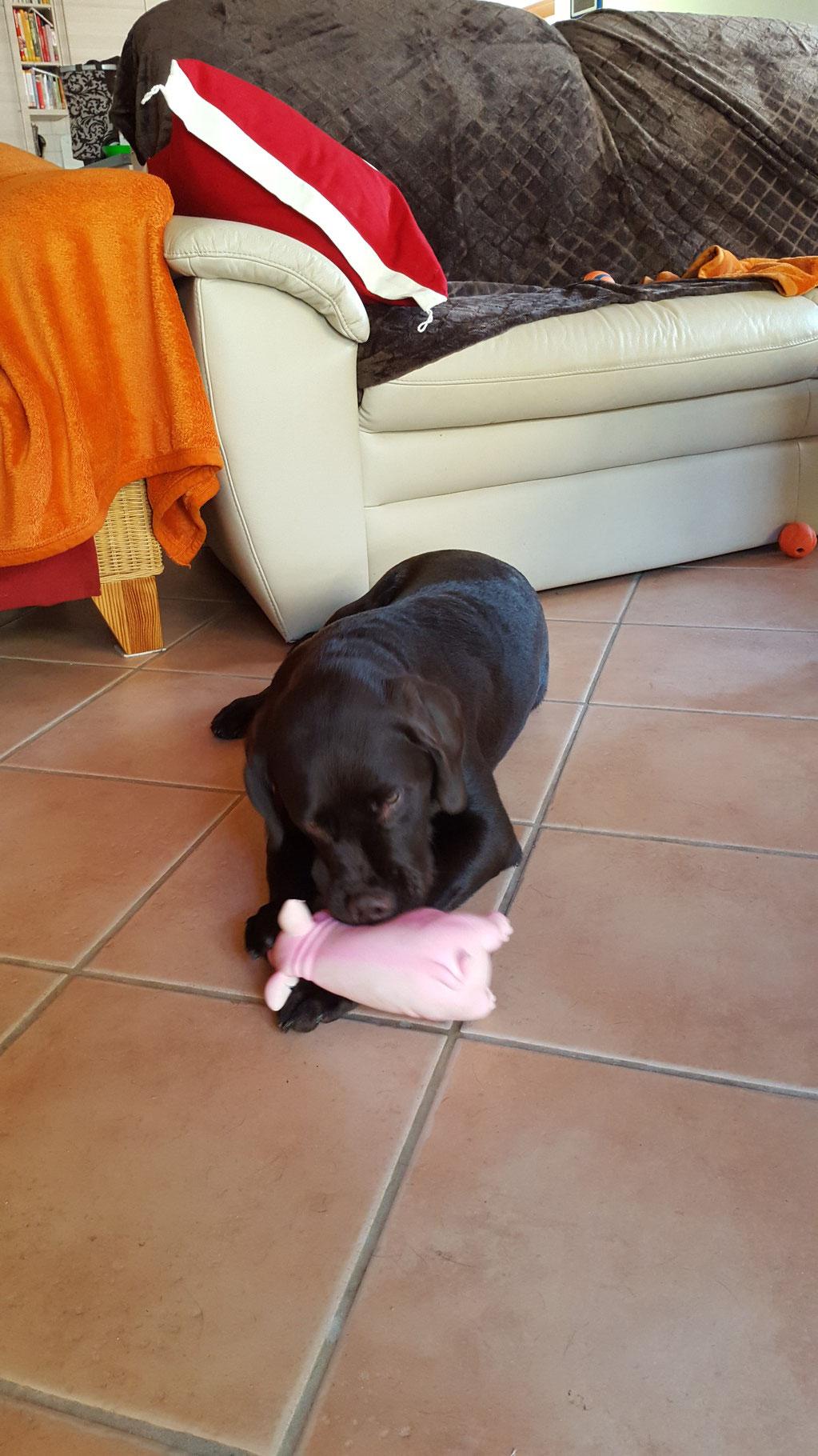 Das rosa Schweinchen quietschte auch toll...es quietschte, bis ich ihm die Beine abgebissen habe.