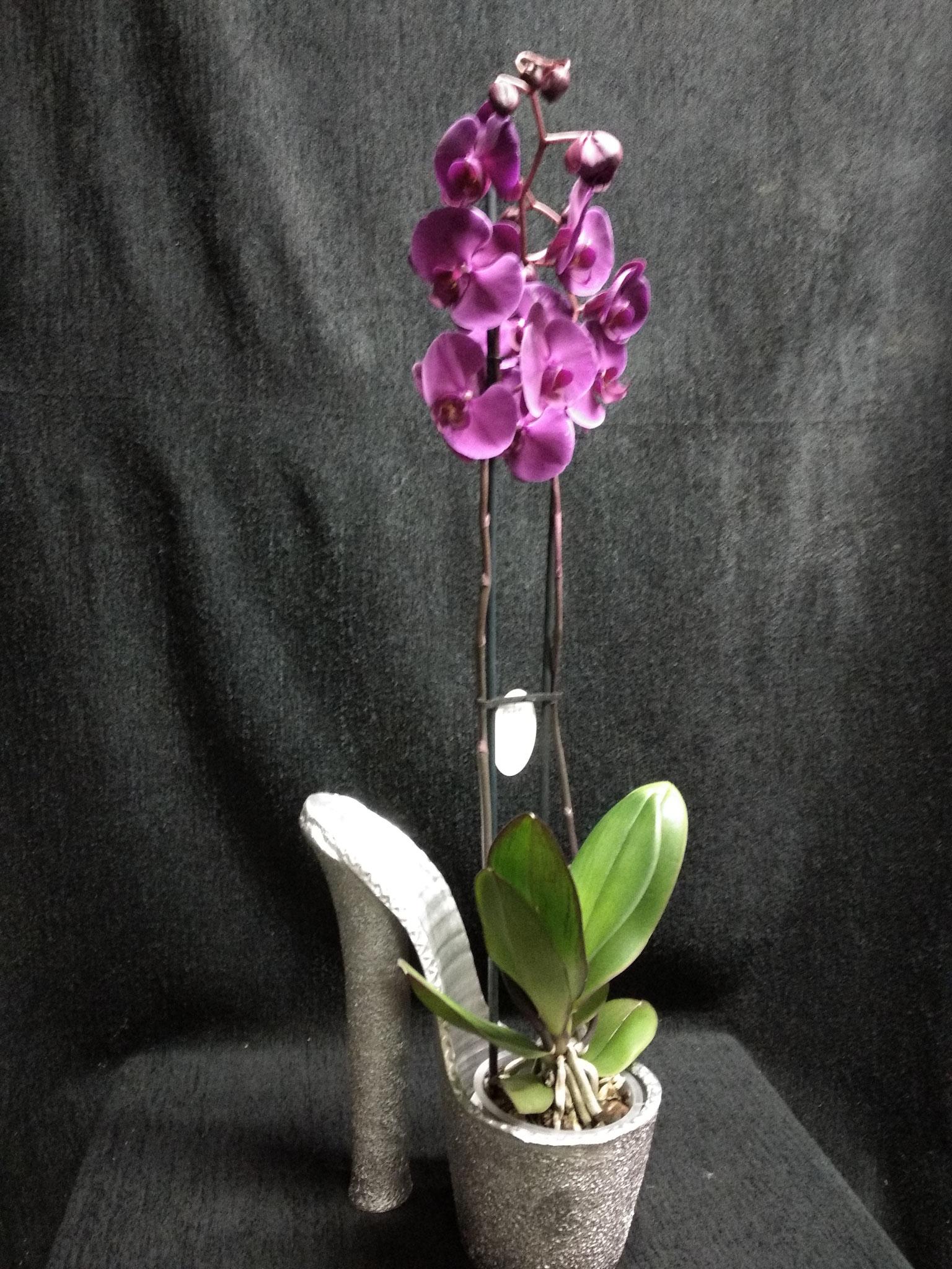 Orquidea Phalaenopsis en base decorativa zapato de plataforma