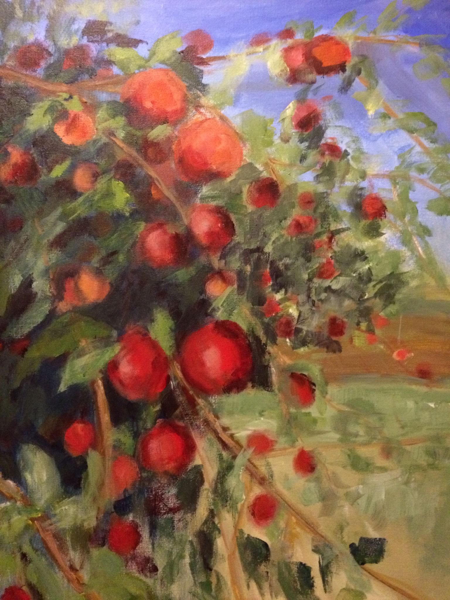 Hangende appels. 60x80cm olie op linnen. 2018.