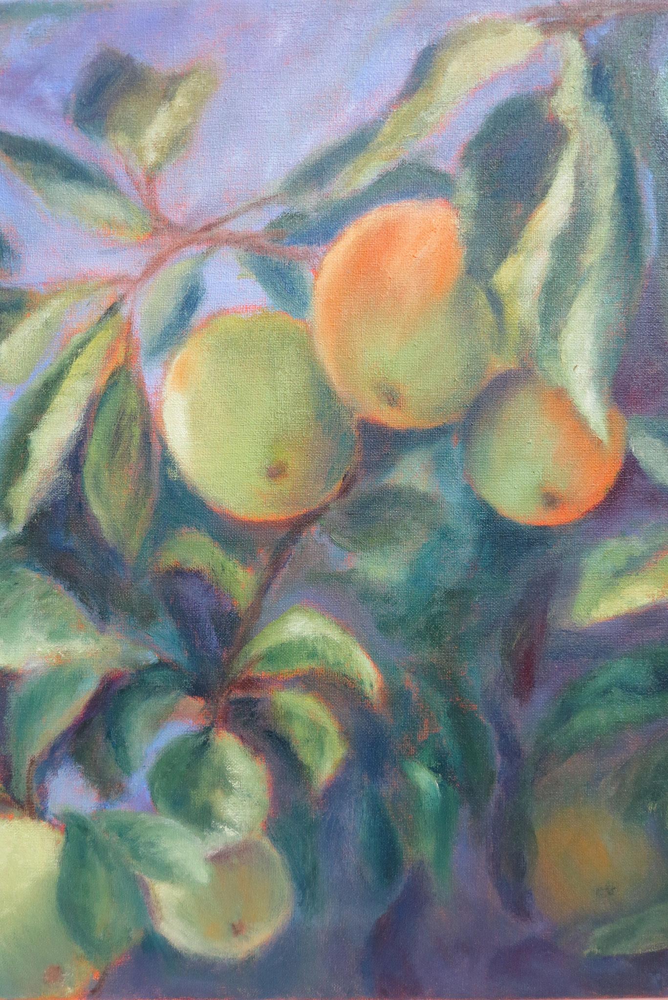 VERKOCHT appels in paars III. 40x50cm olie op linnen. 2019.