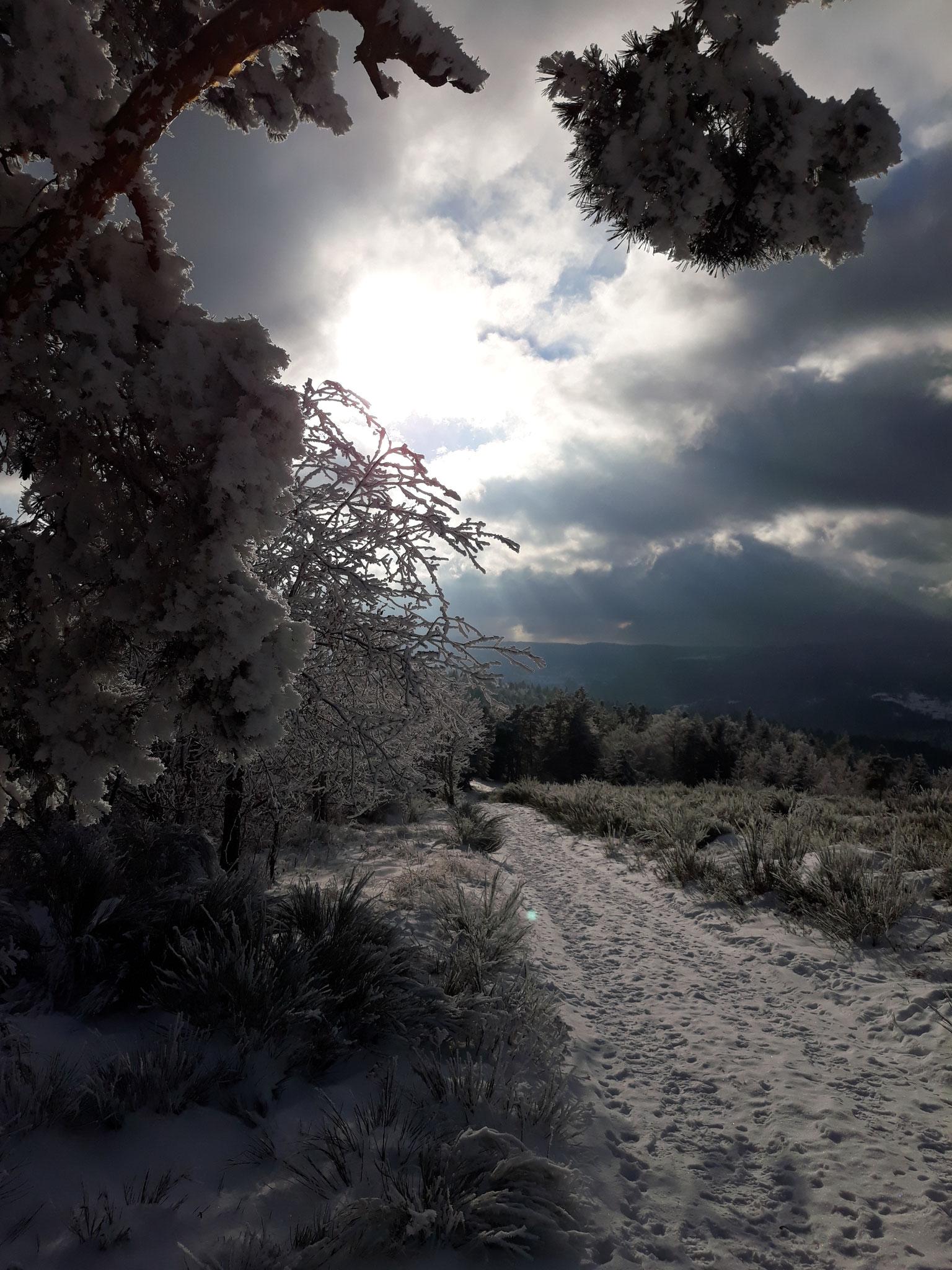 wandeling in de winter