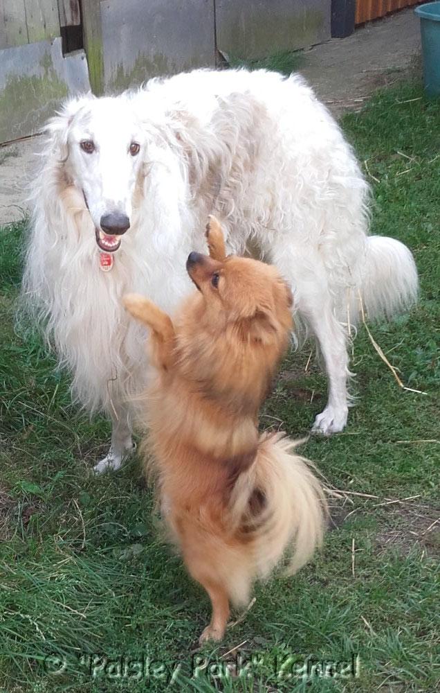 Polle und Igor