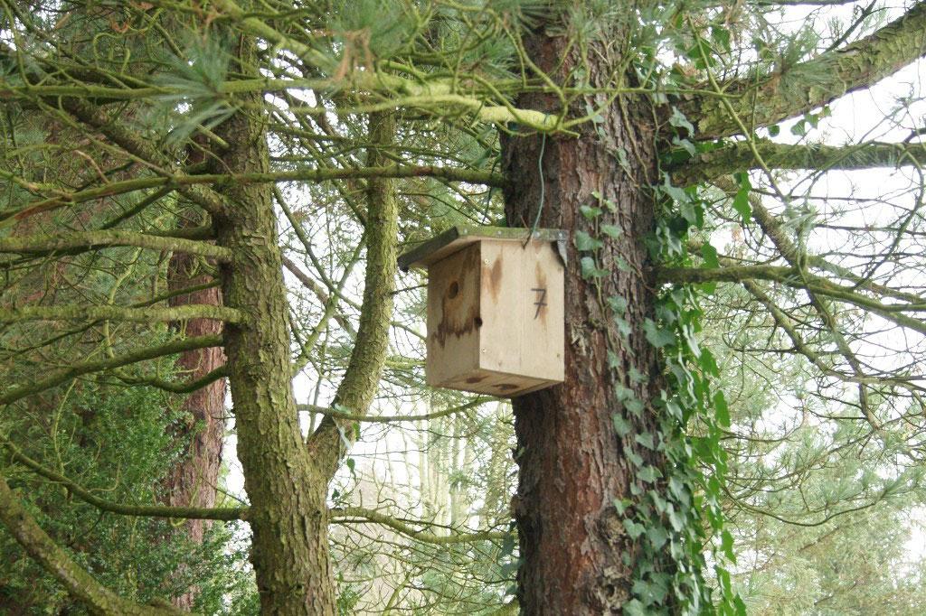 Auf dem Friedhof Kleinzschocher betreut der NABU beispielsweise viele Vogelnisthilfen...