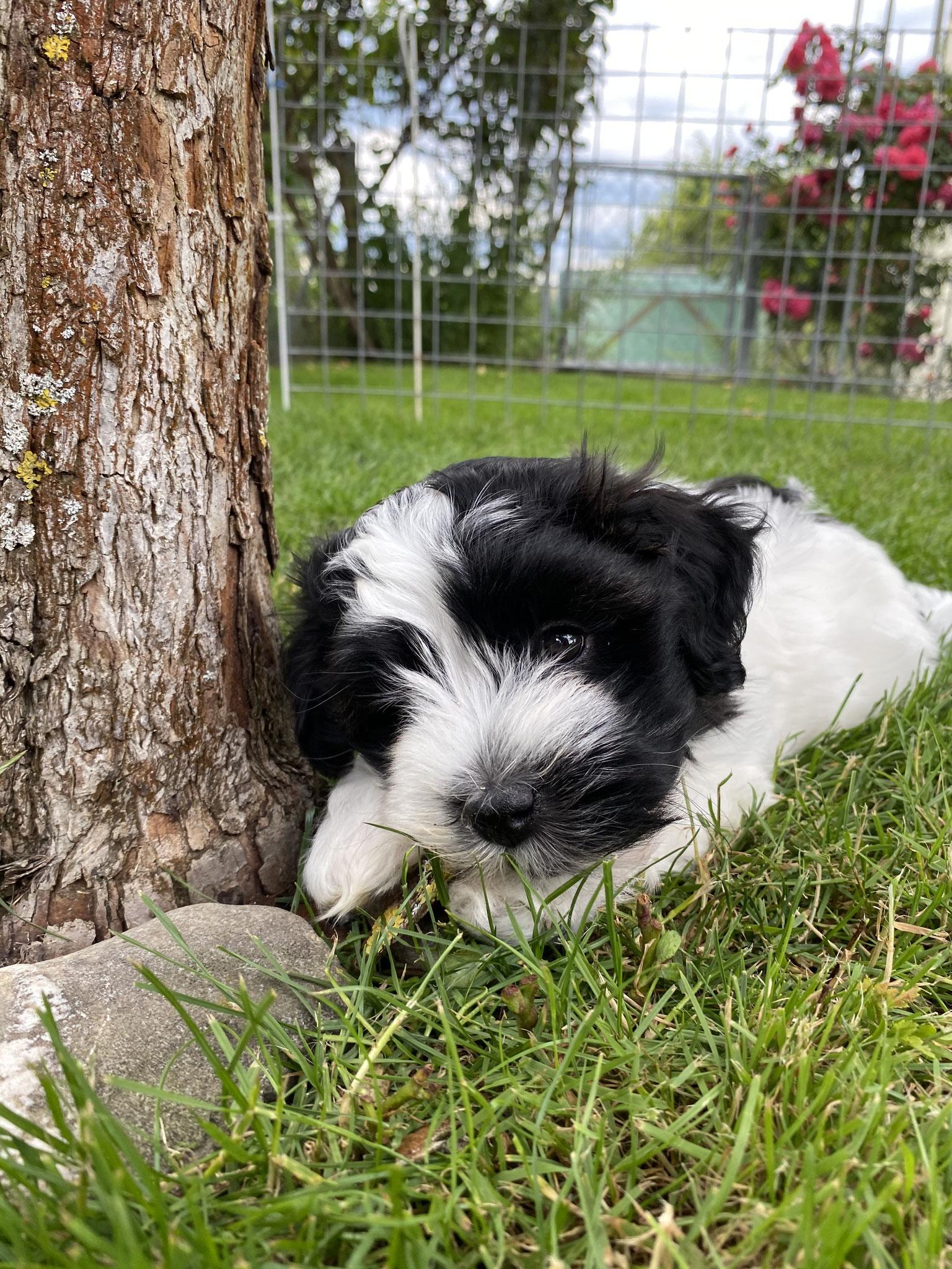 Colina, unser süsses Hundemädchen