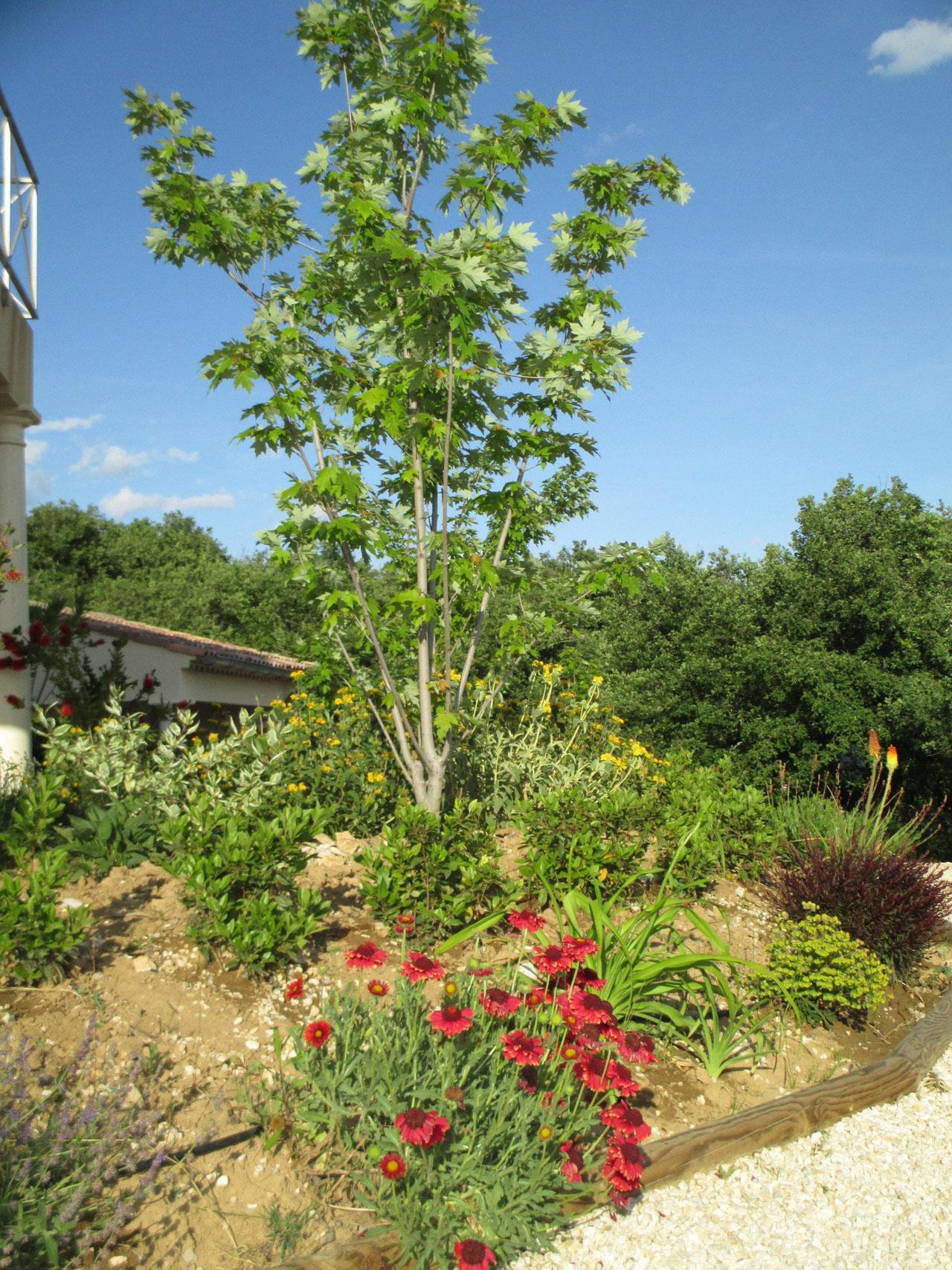 Le jardin du Mas de Molines à Vogüé en Ardèche