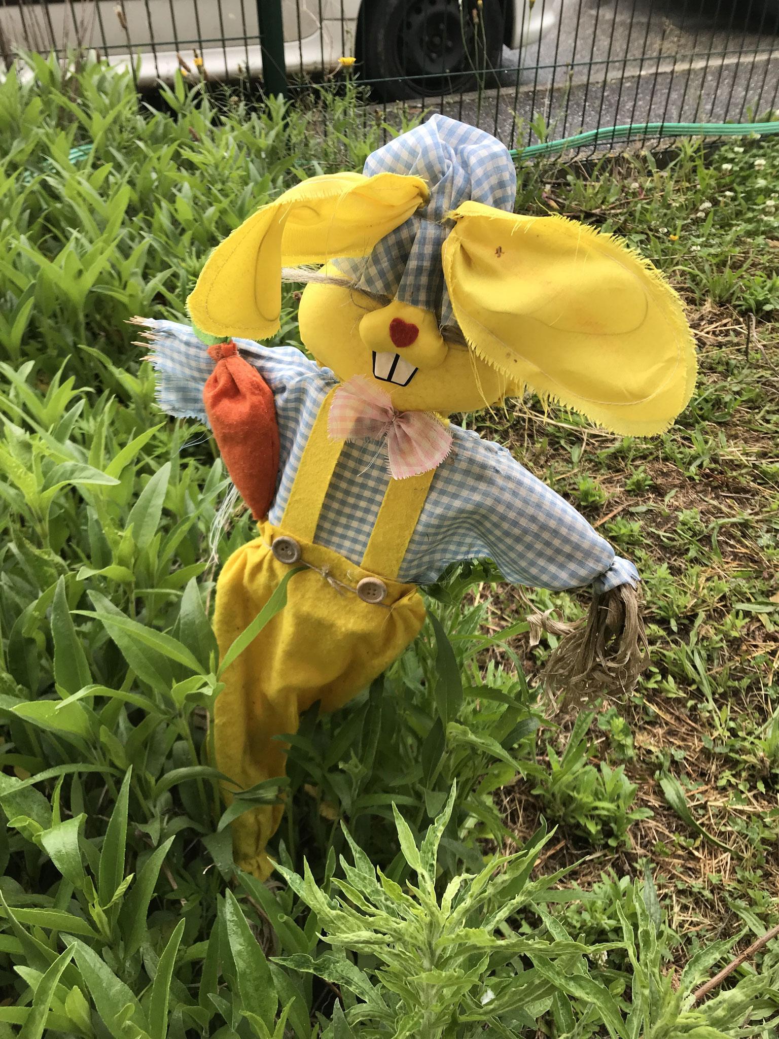 Mr Lapin surveille le jardin