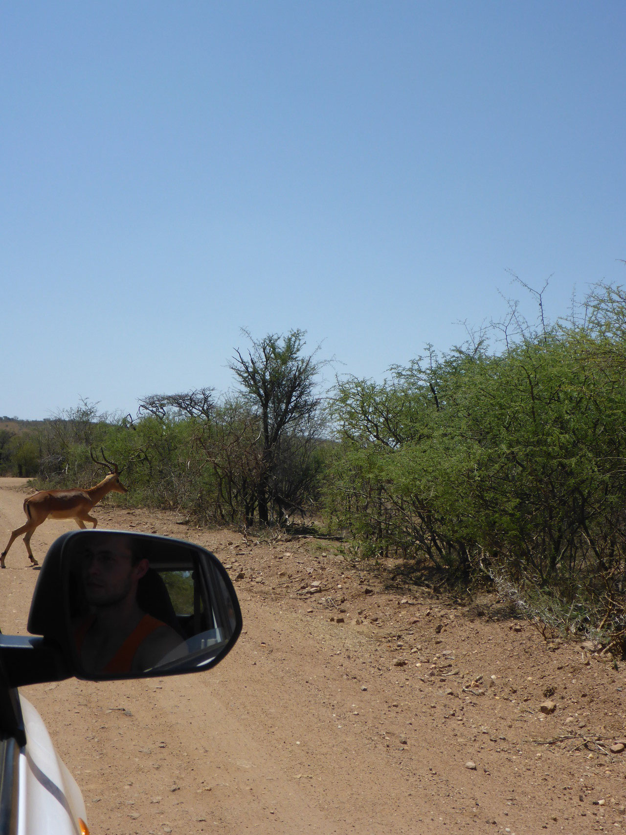 Where is that Impala coming from?