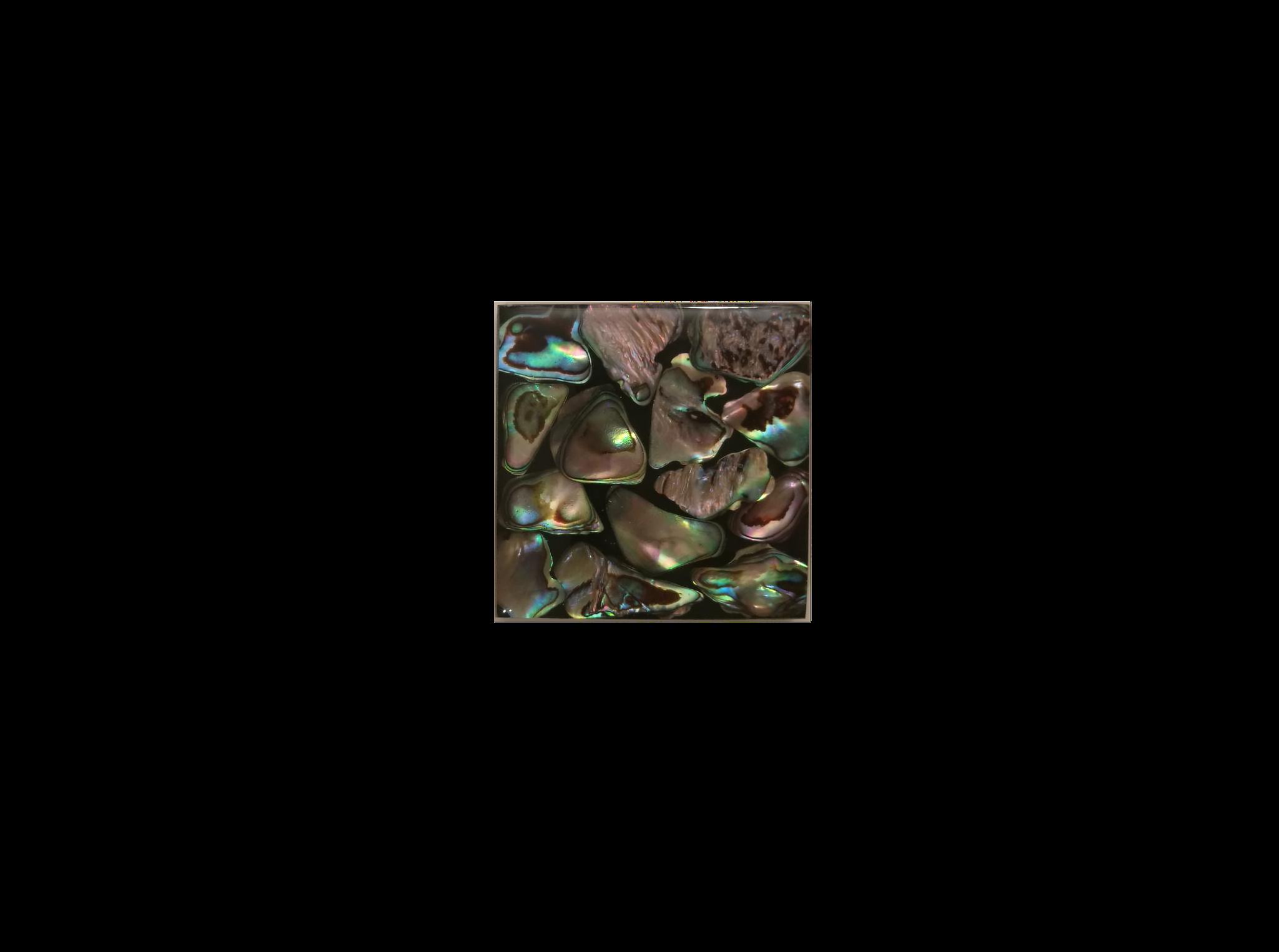 Muschelfliese 5x5cm