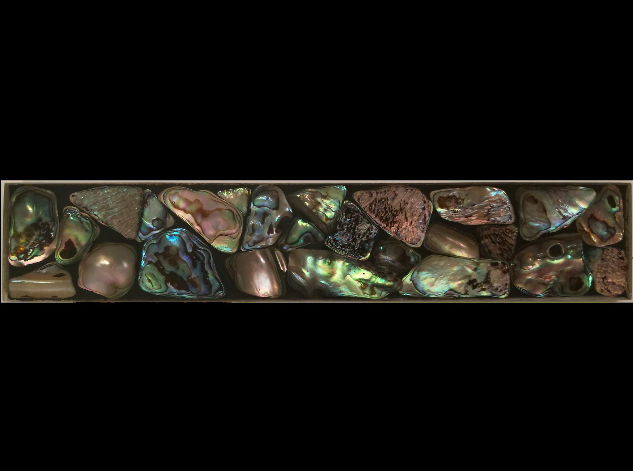 Muschelfliese 20x4cm