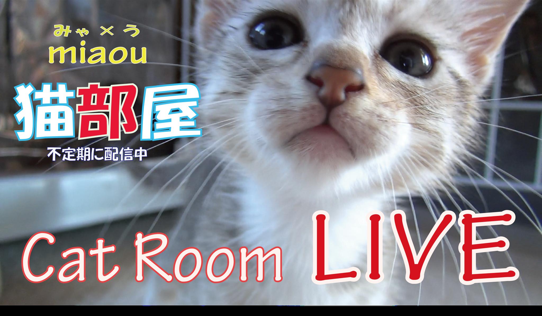 猫部屋ライブ