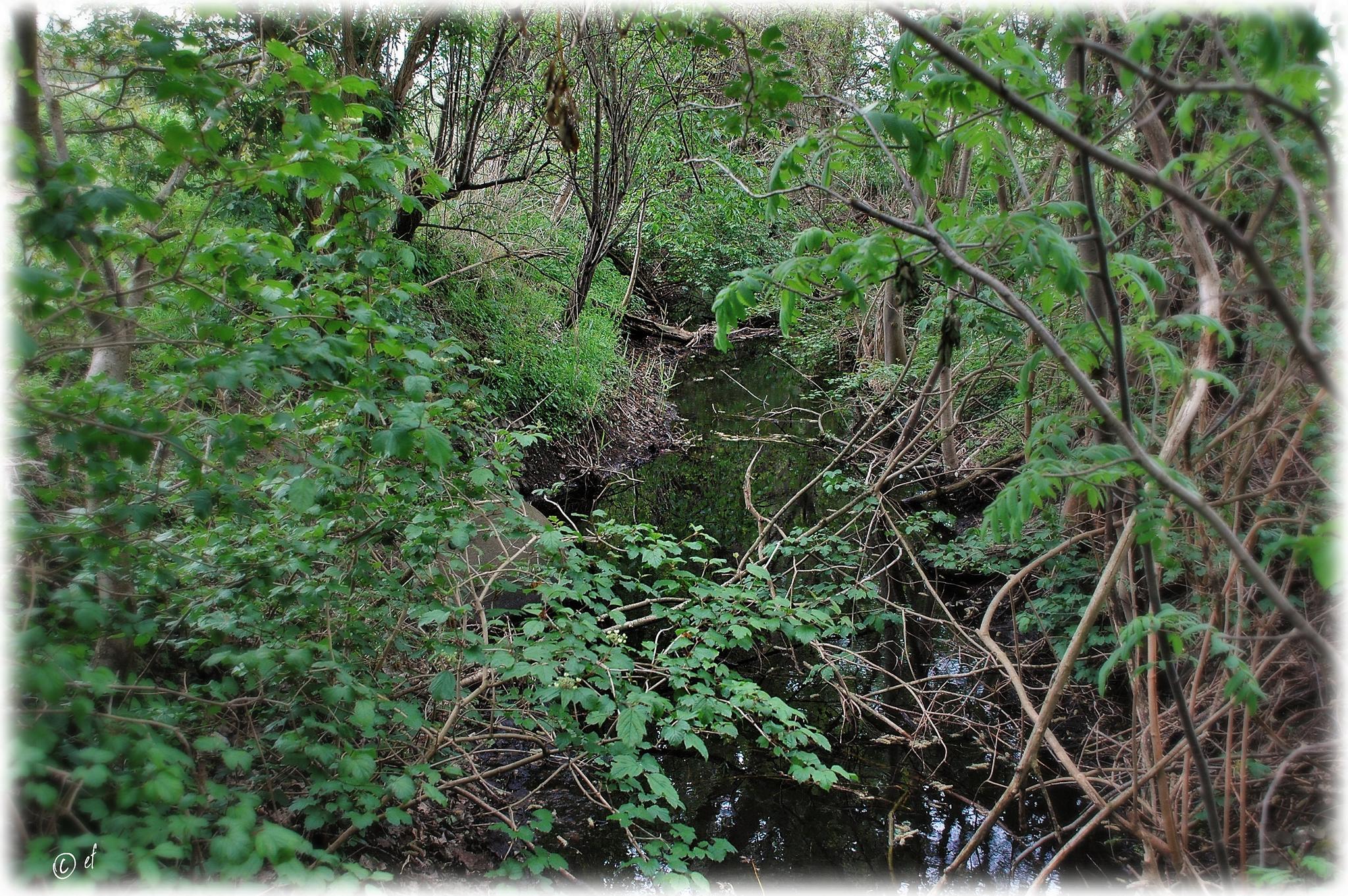 Der Wassergraben
