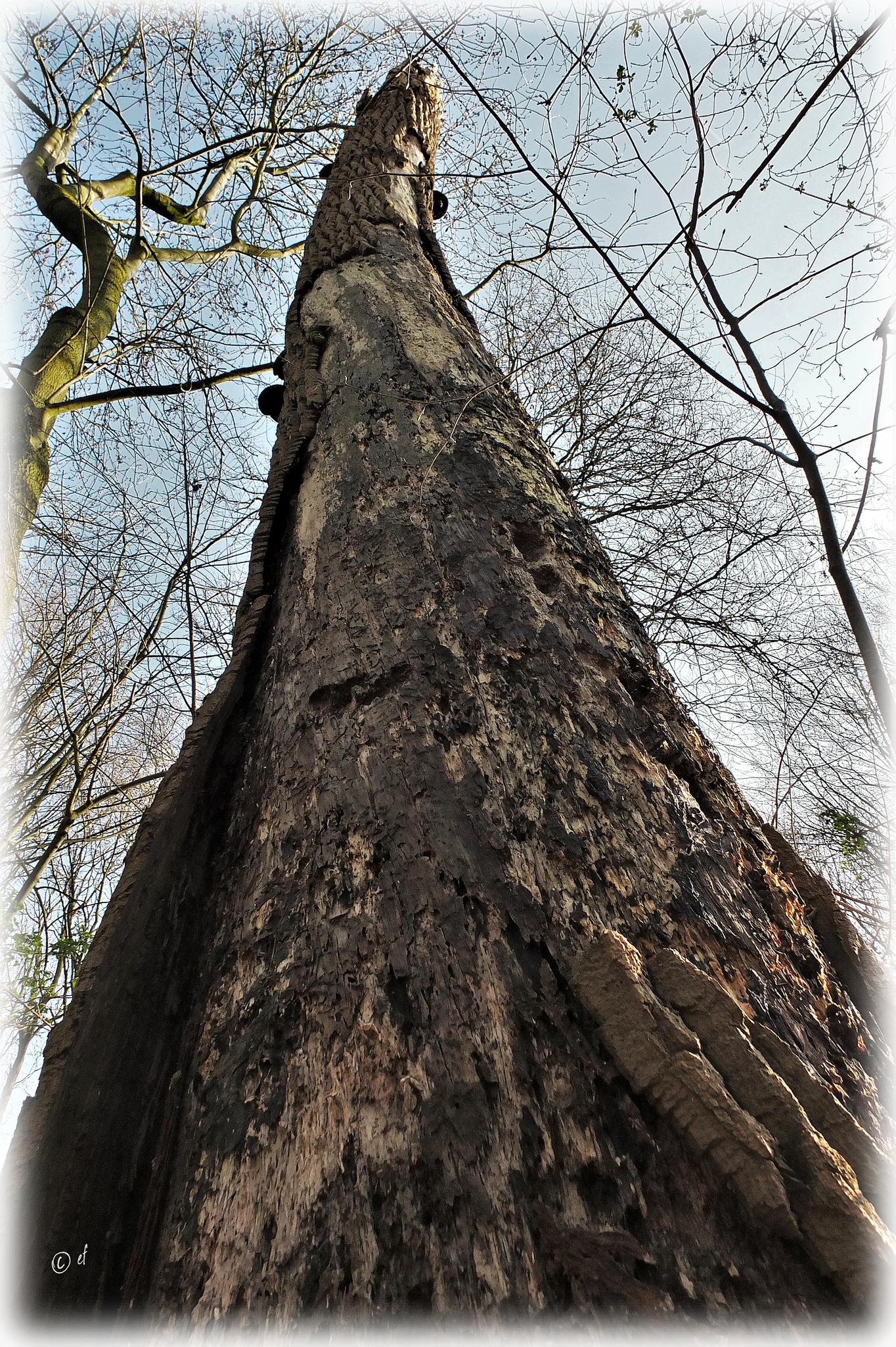 Totholz - Ein Blick hinauf