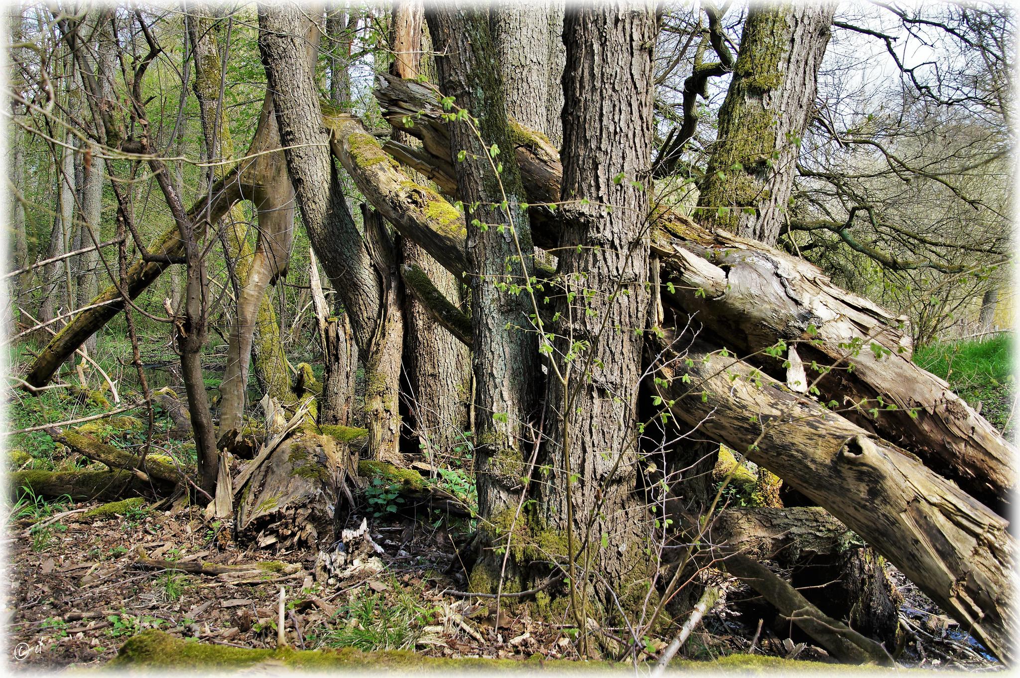 Der Totholzhaufen