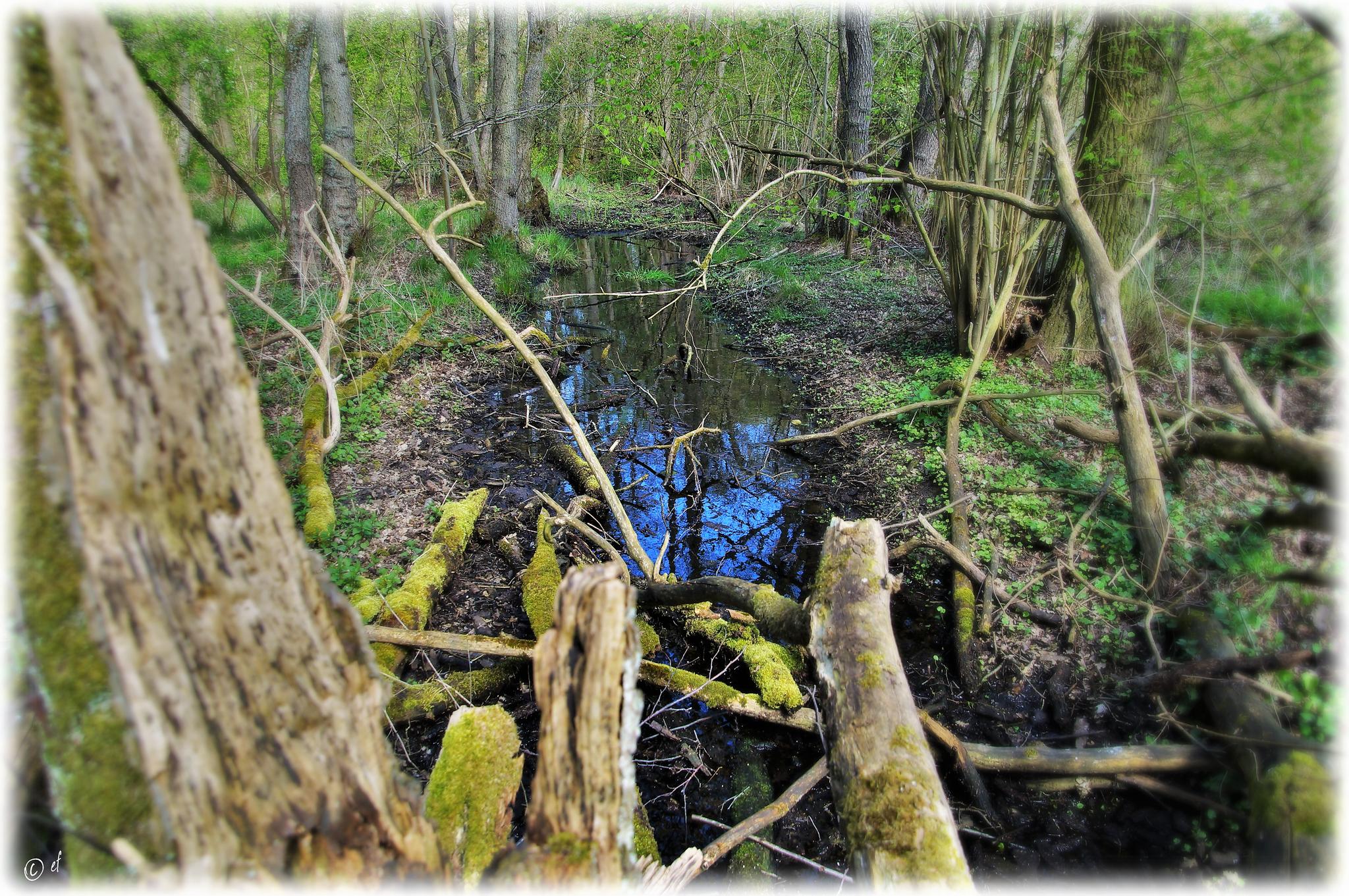Eine andere Betrachtungsweise auf den Wassergraben