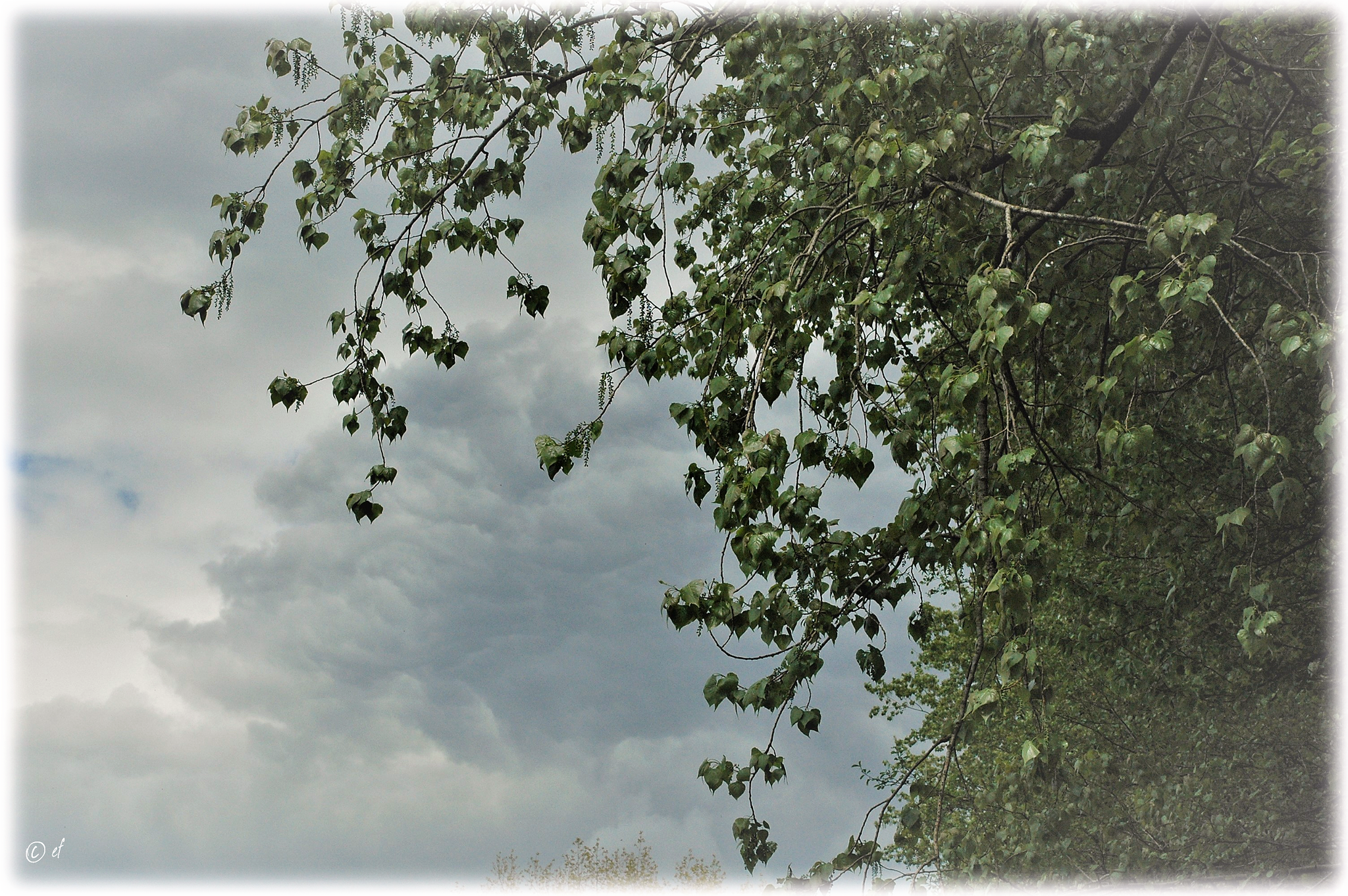 Der Schein: Wenn Blätter den Himmel berühren