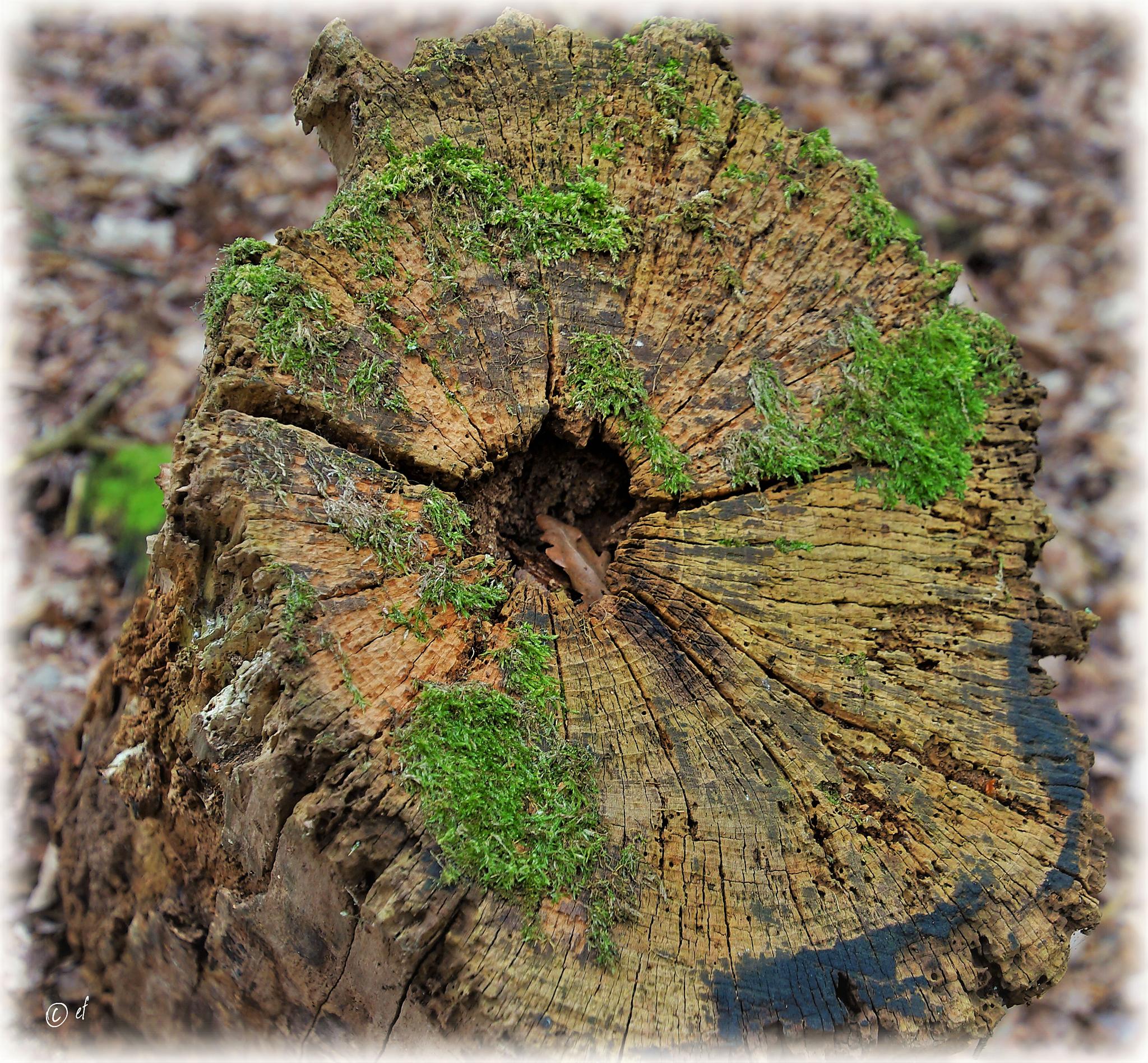 Der bunte Baumstumpfteller