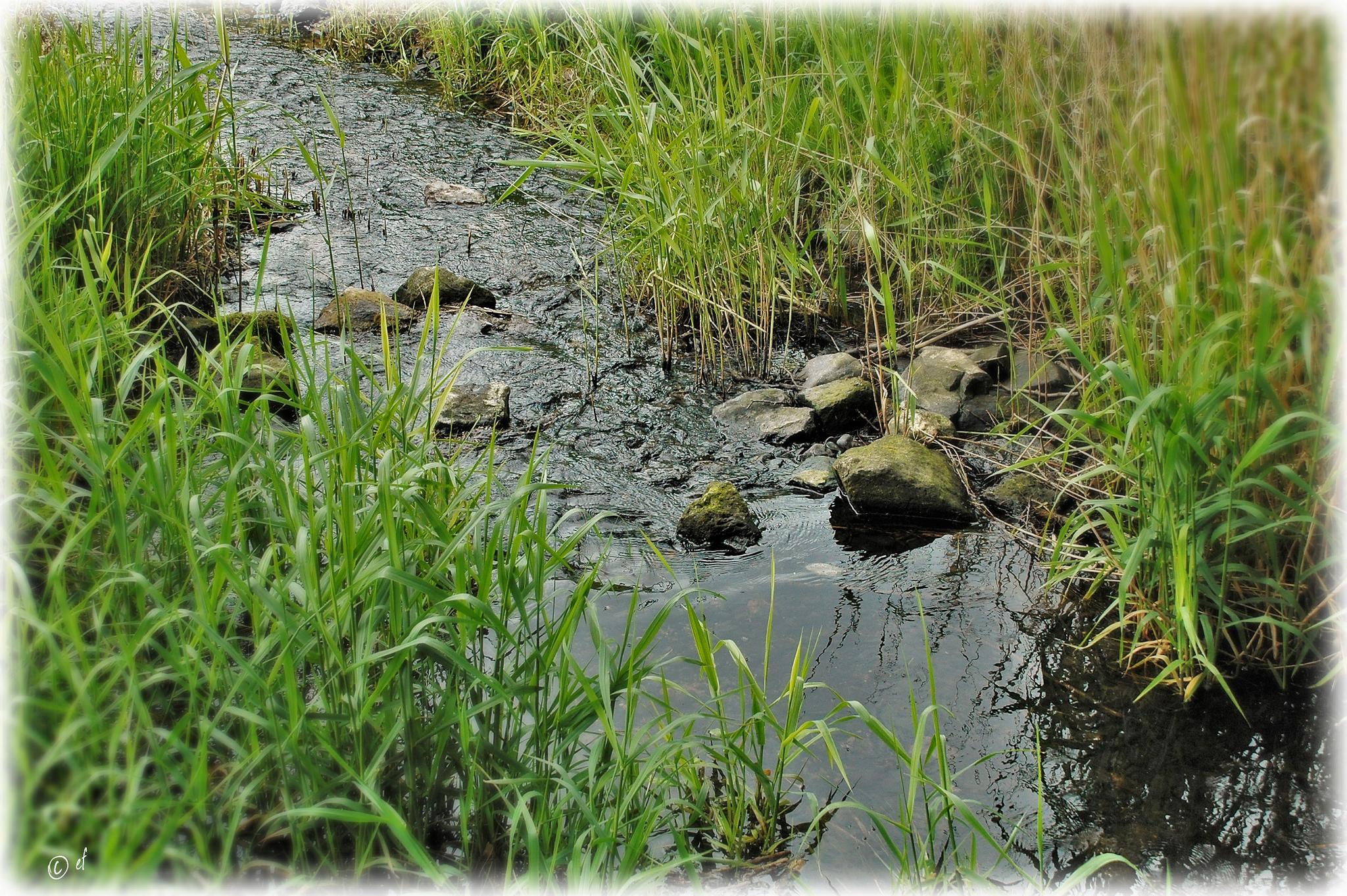 Wassergeflüster