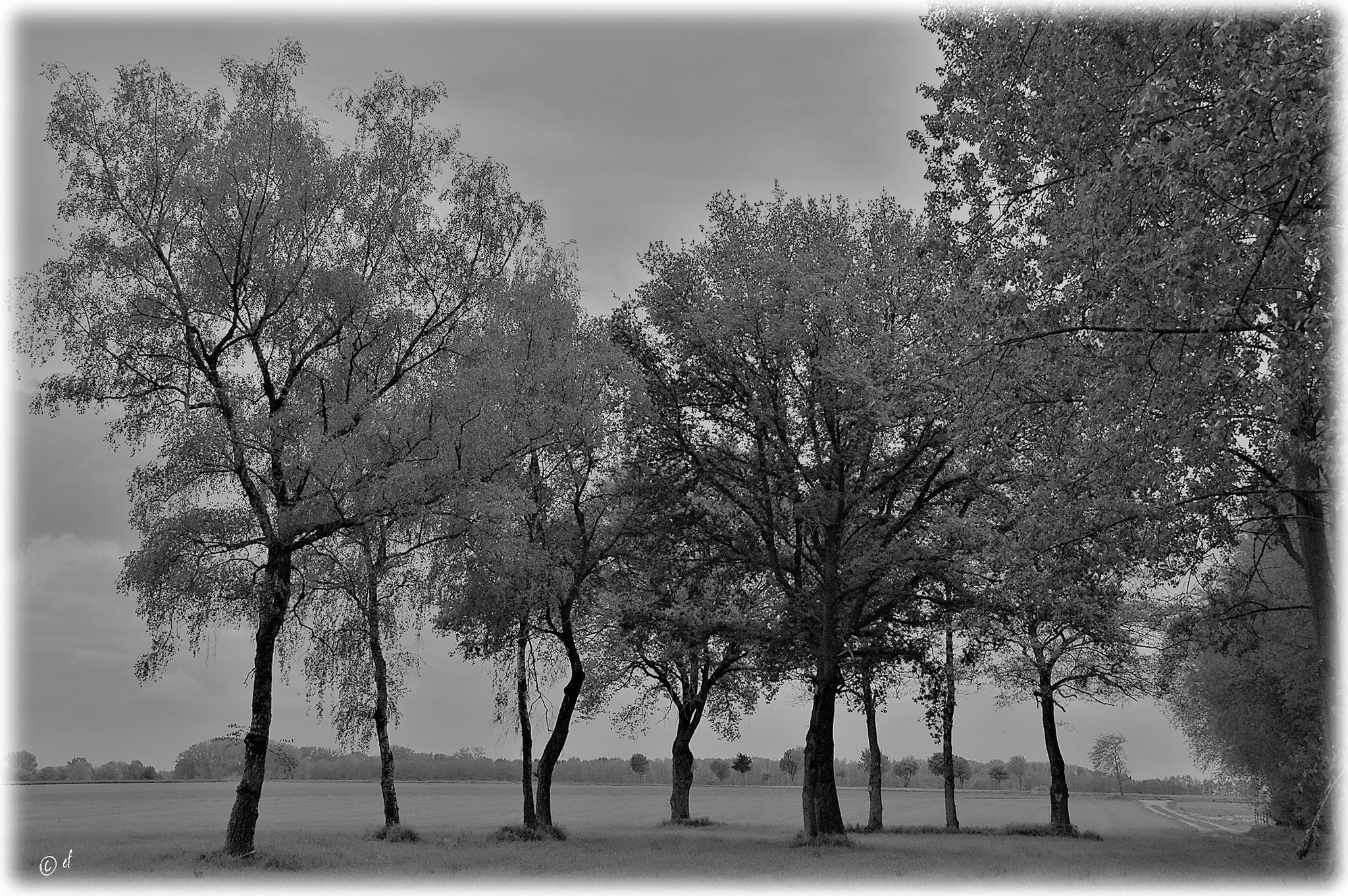 Die Baumgruppe