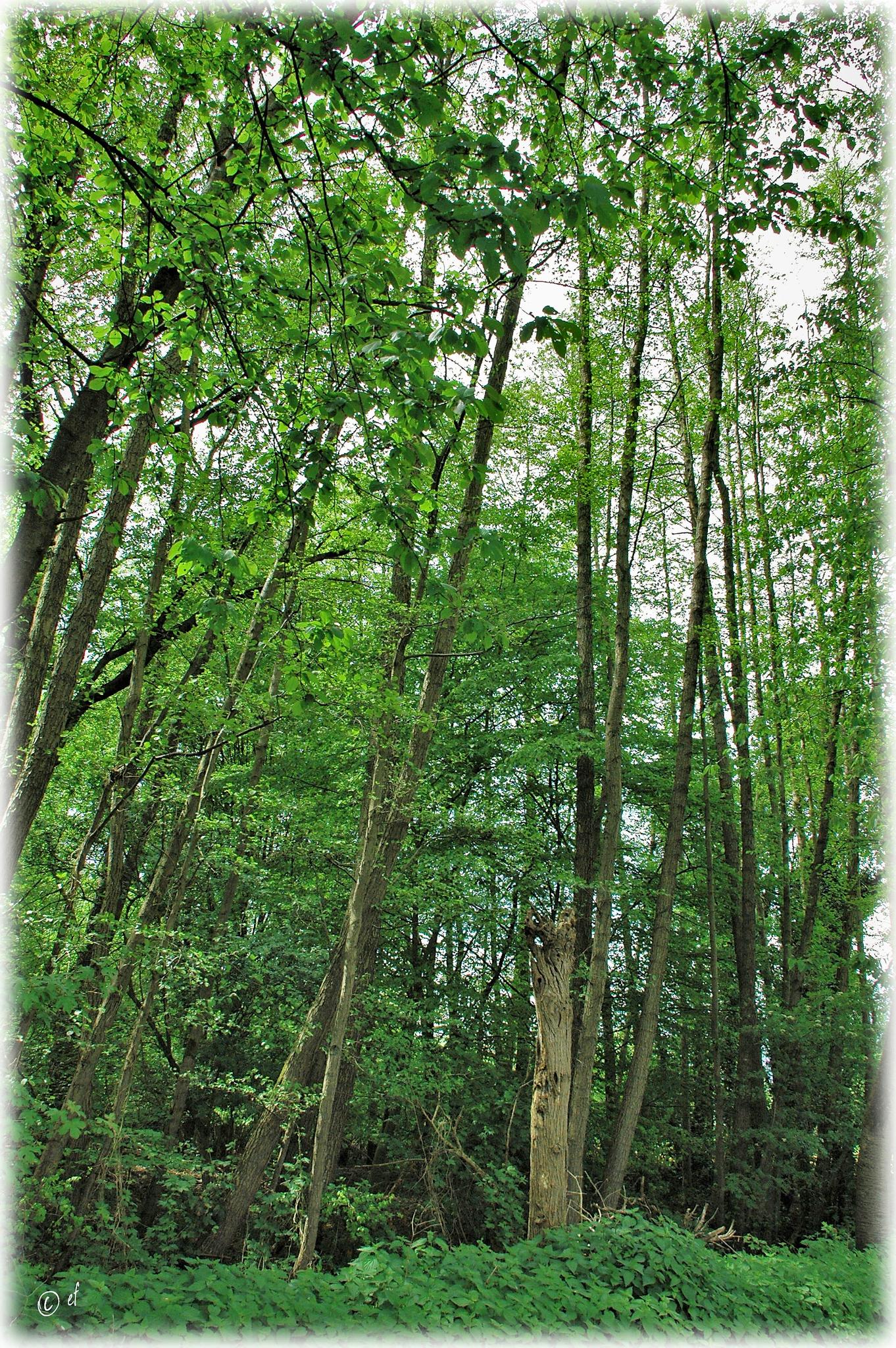 Grüne Stäbe