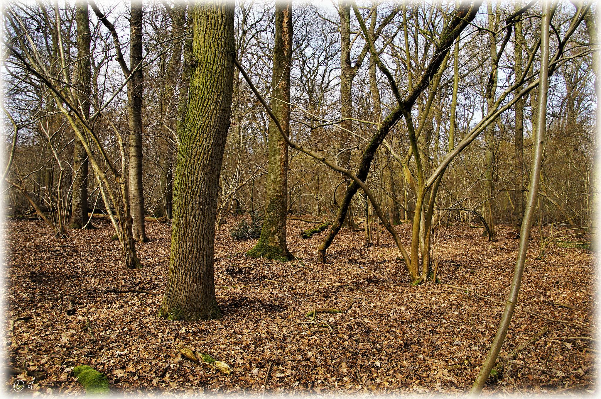 Ein lichtes Stück Naturwald