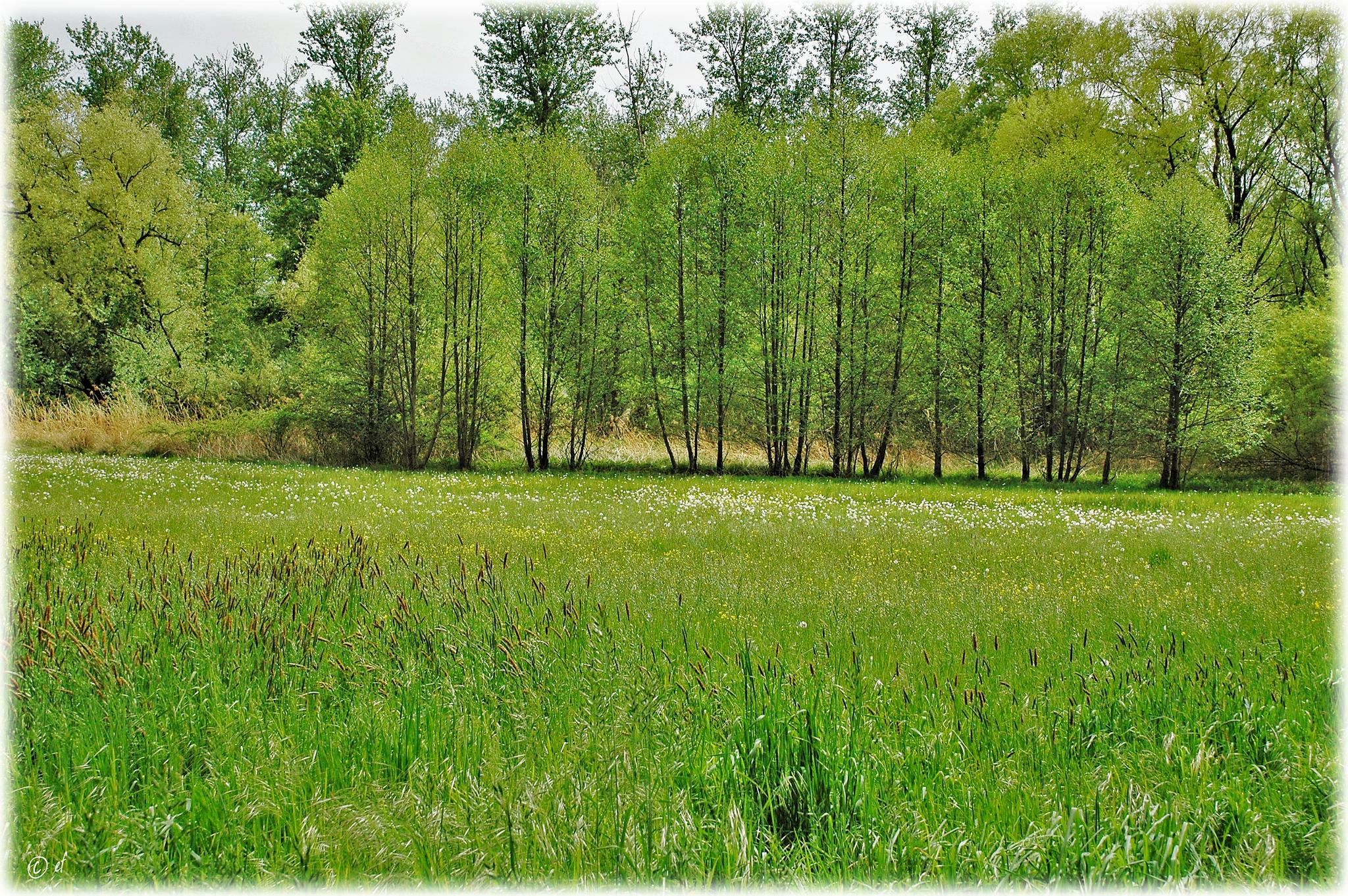 Feld & Wald im NSG