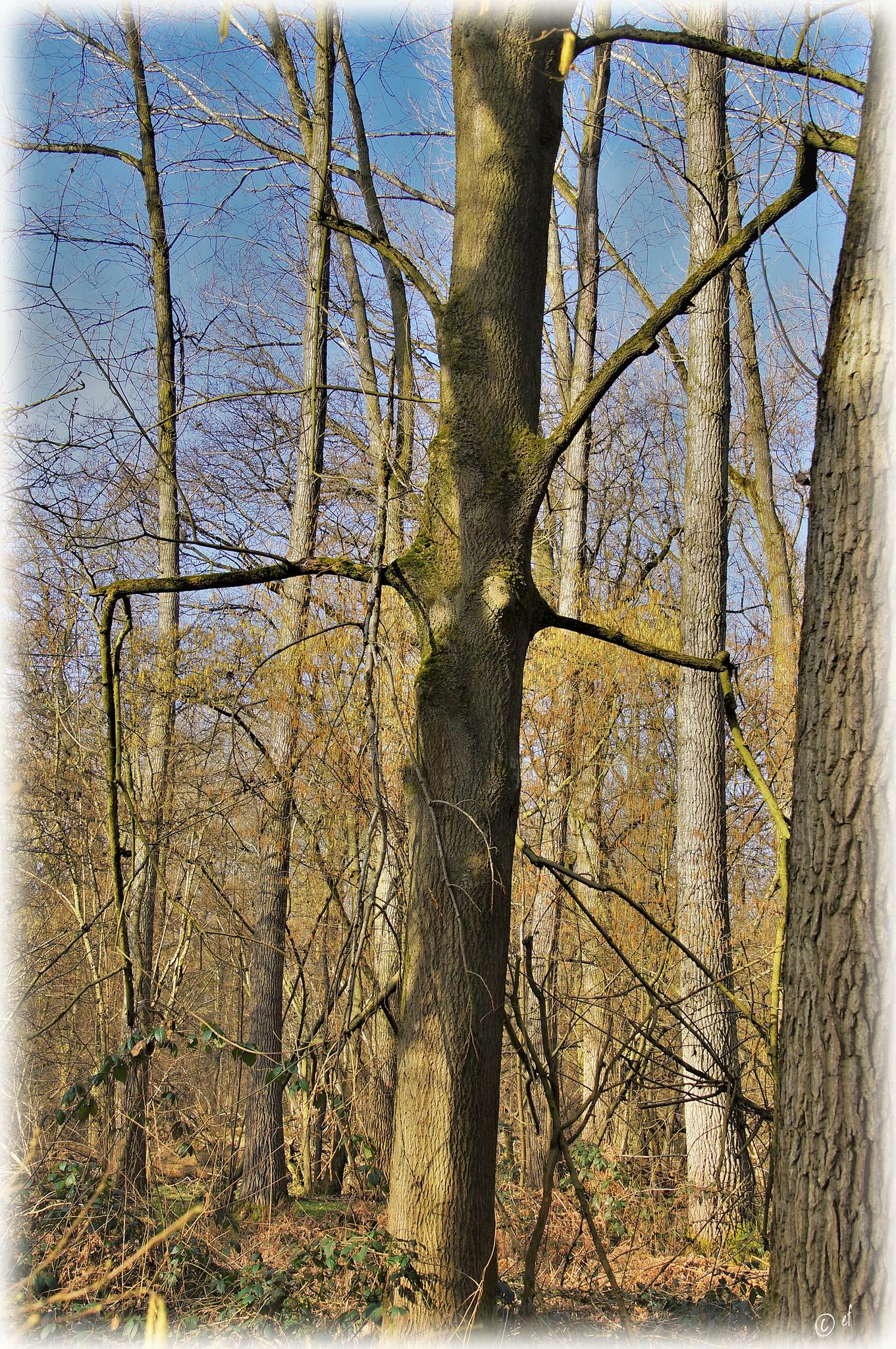 Das Baumkreuz