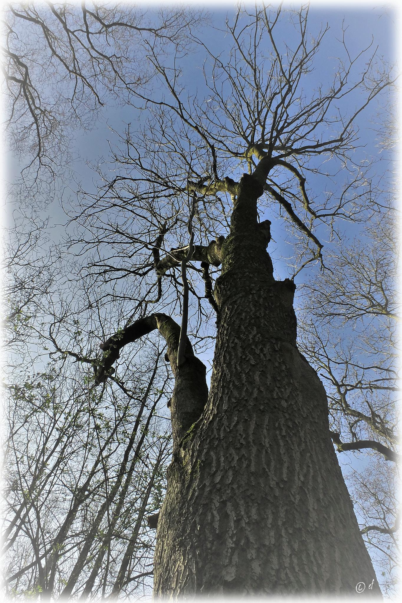 Der Baum mit dem kurvigen Ast