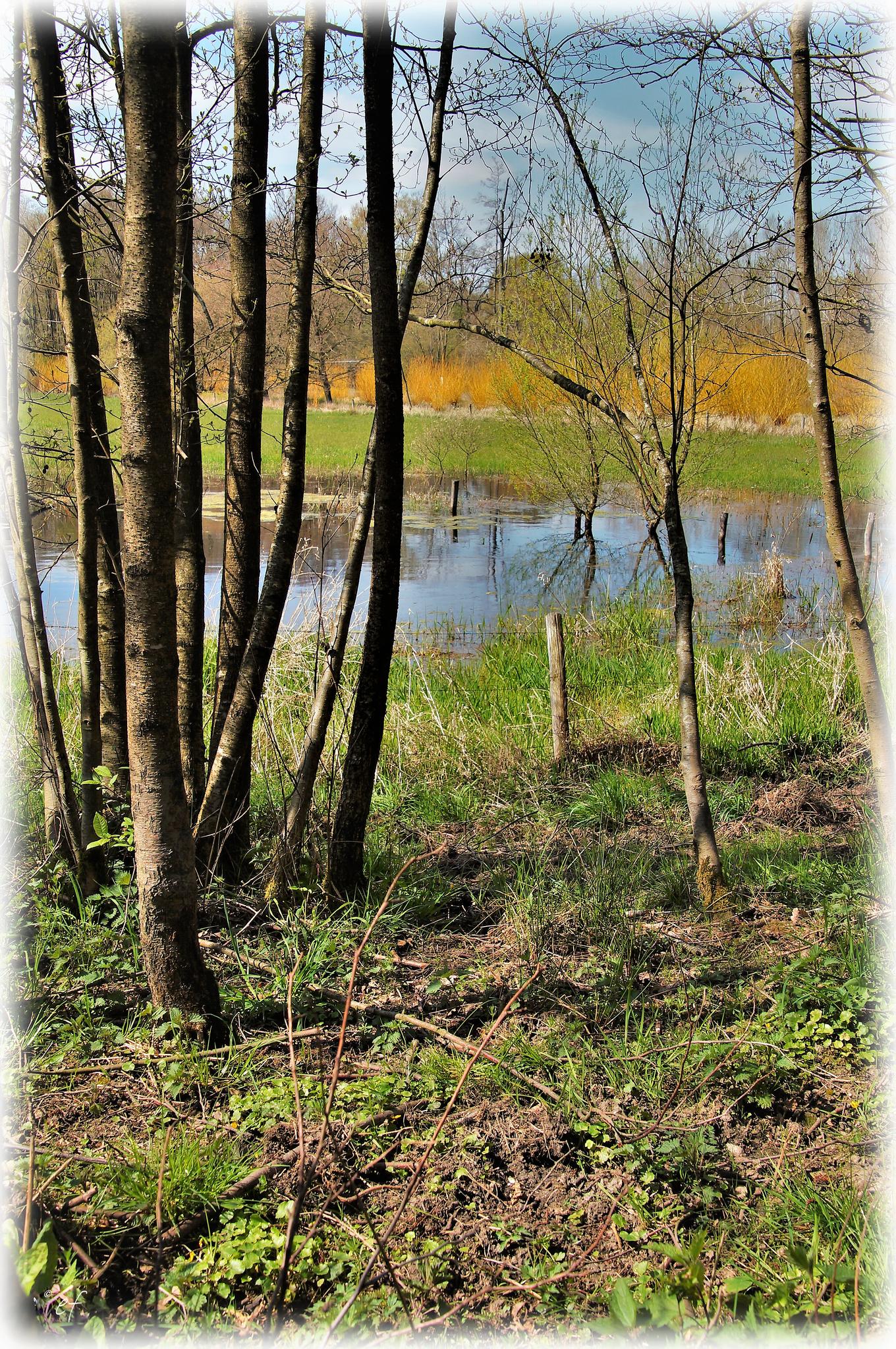 Zwischen Wiesen & Wald