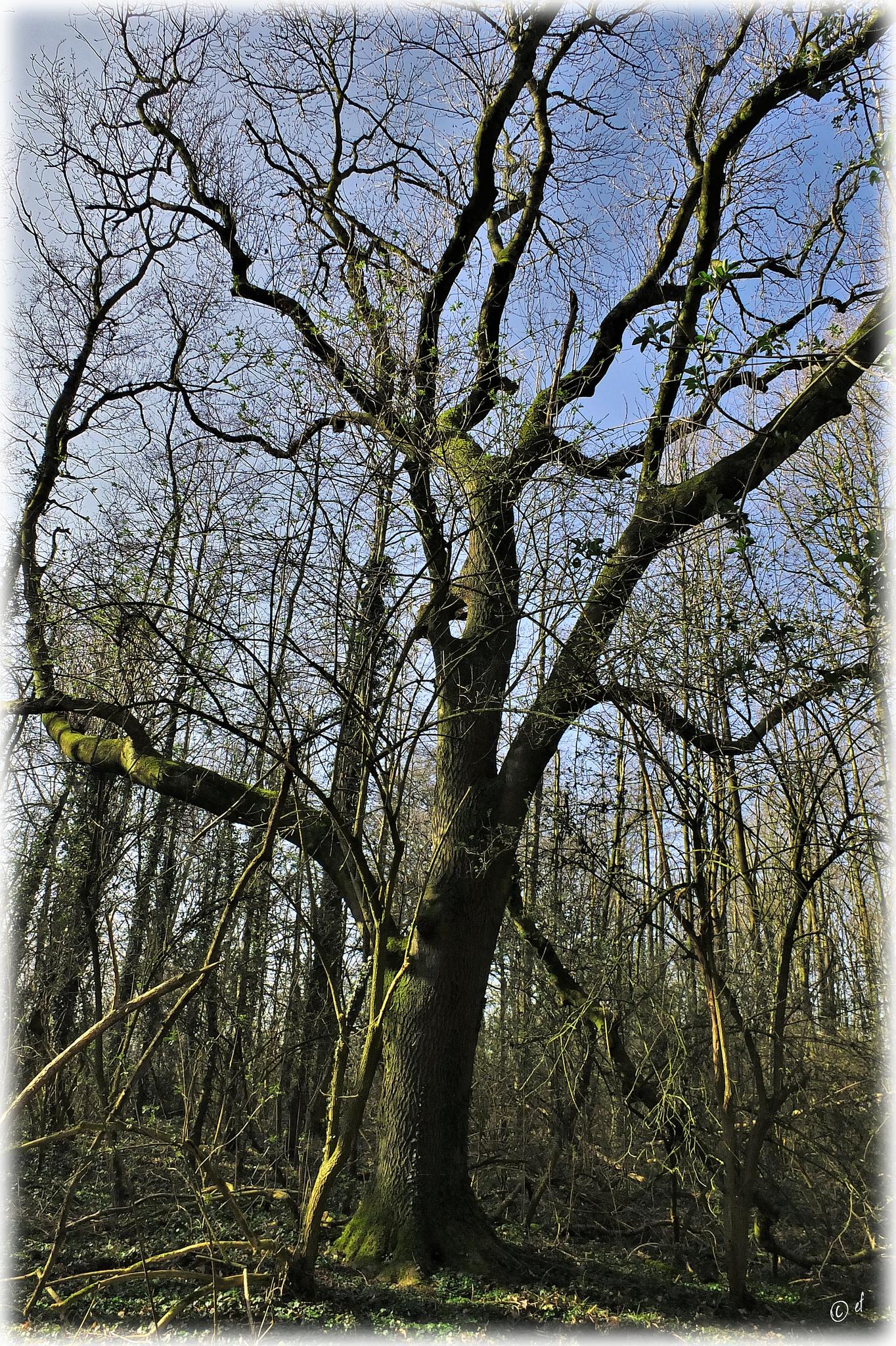Ein schöner Baum