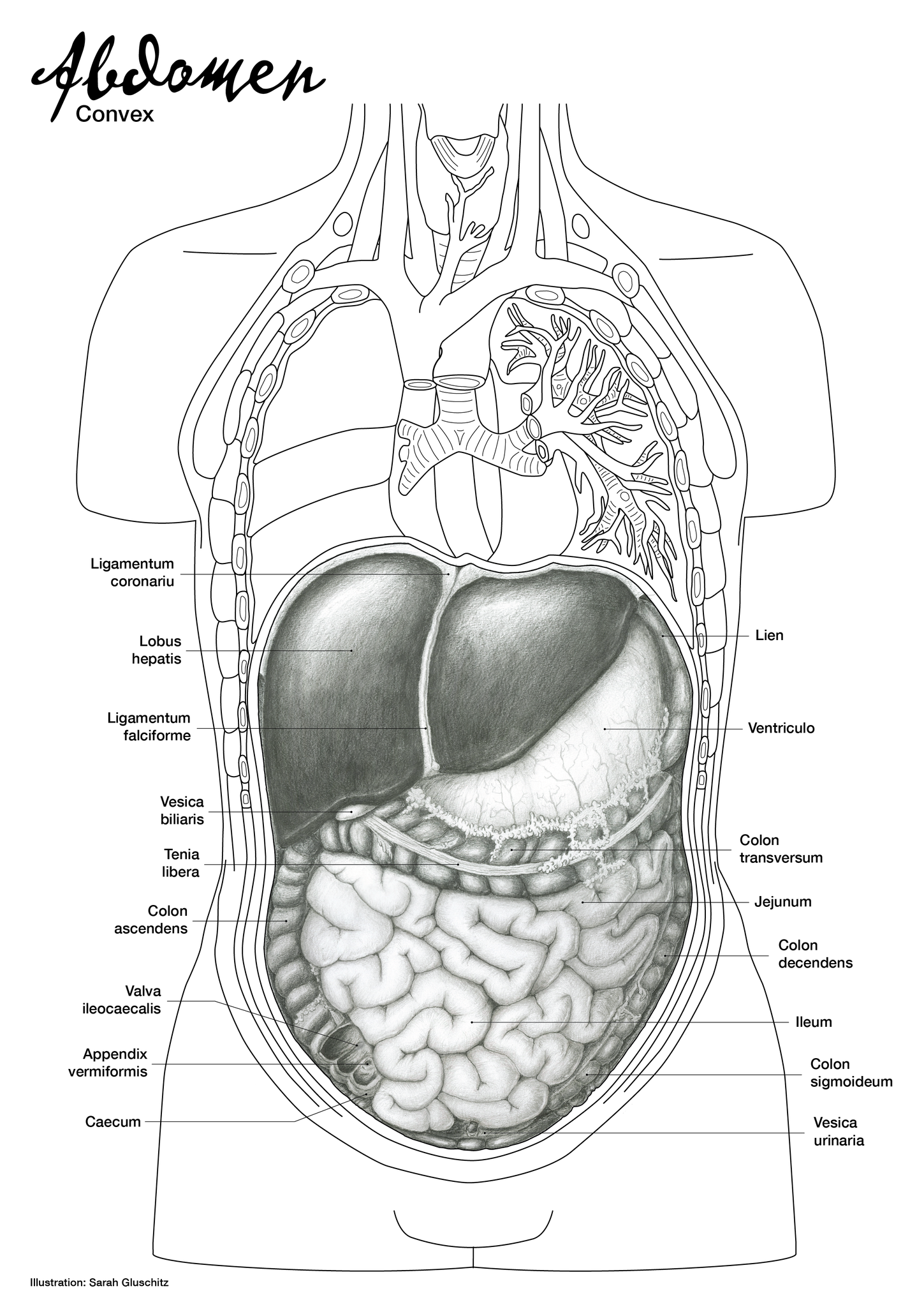 Erfreut Kolon Bild Anatomie Galerie - Anatomie Ideen - finotti.info
